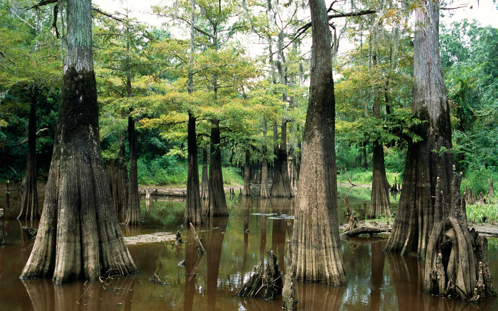 A Guide to the National Parks of Texas