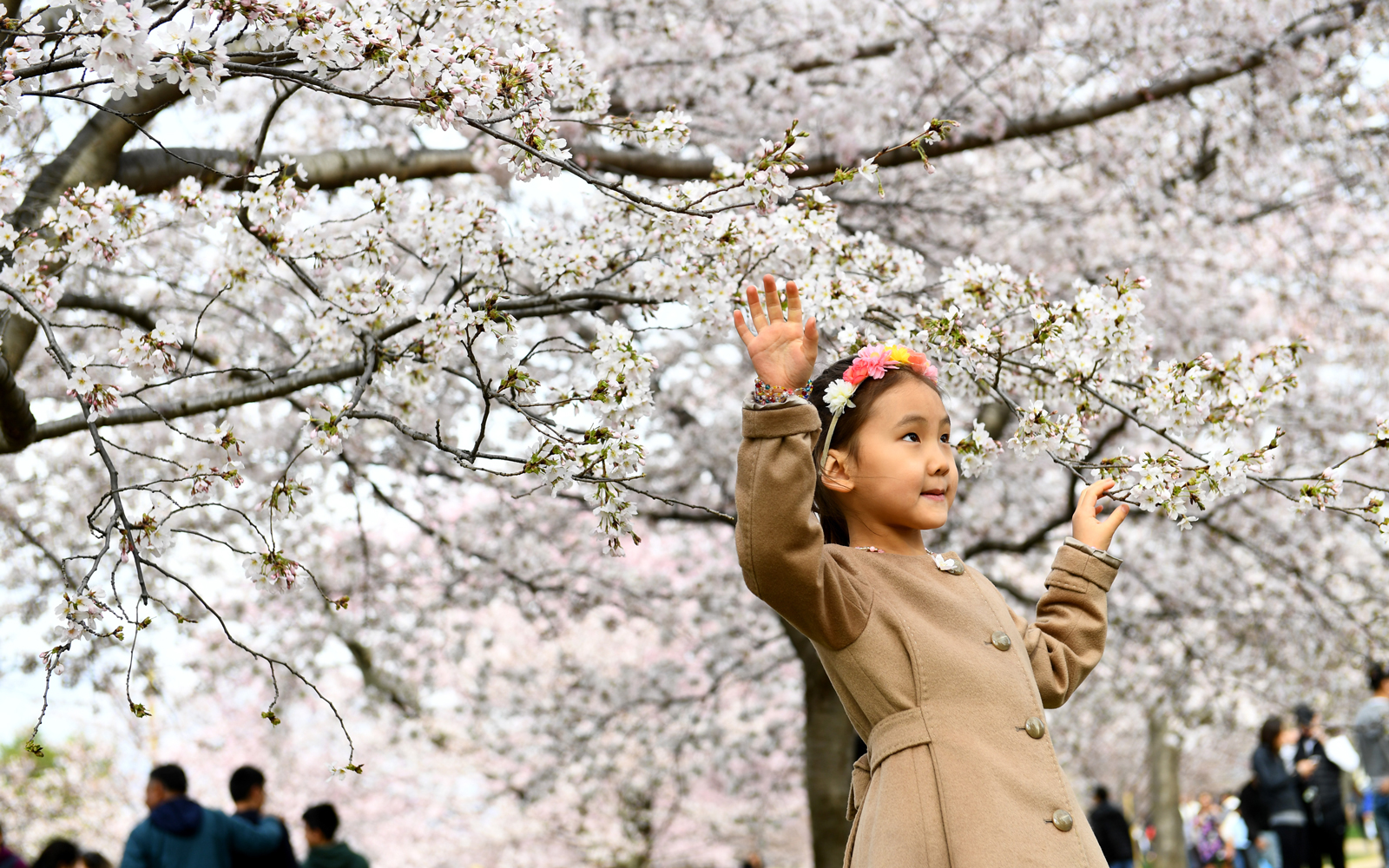 Guamaral Sod-Erdene, 5, poses for photos for her mother, near the Washington Monument on Easter where most of the trees are in full bloom, unlike the tidal basin Sunday April 01, 2018