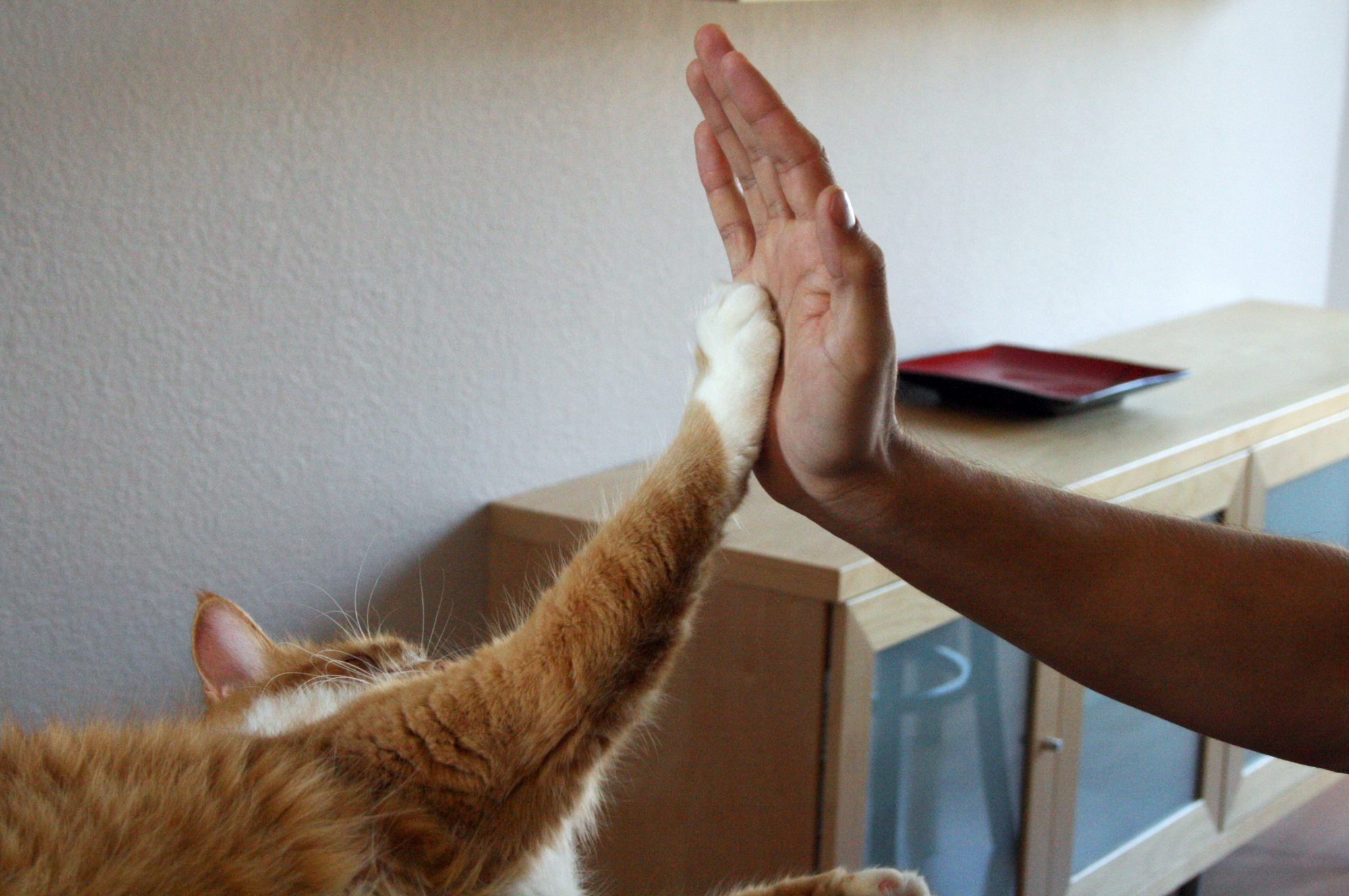 Southern Living Cat High Five