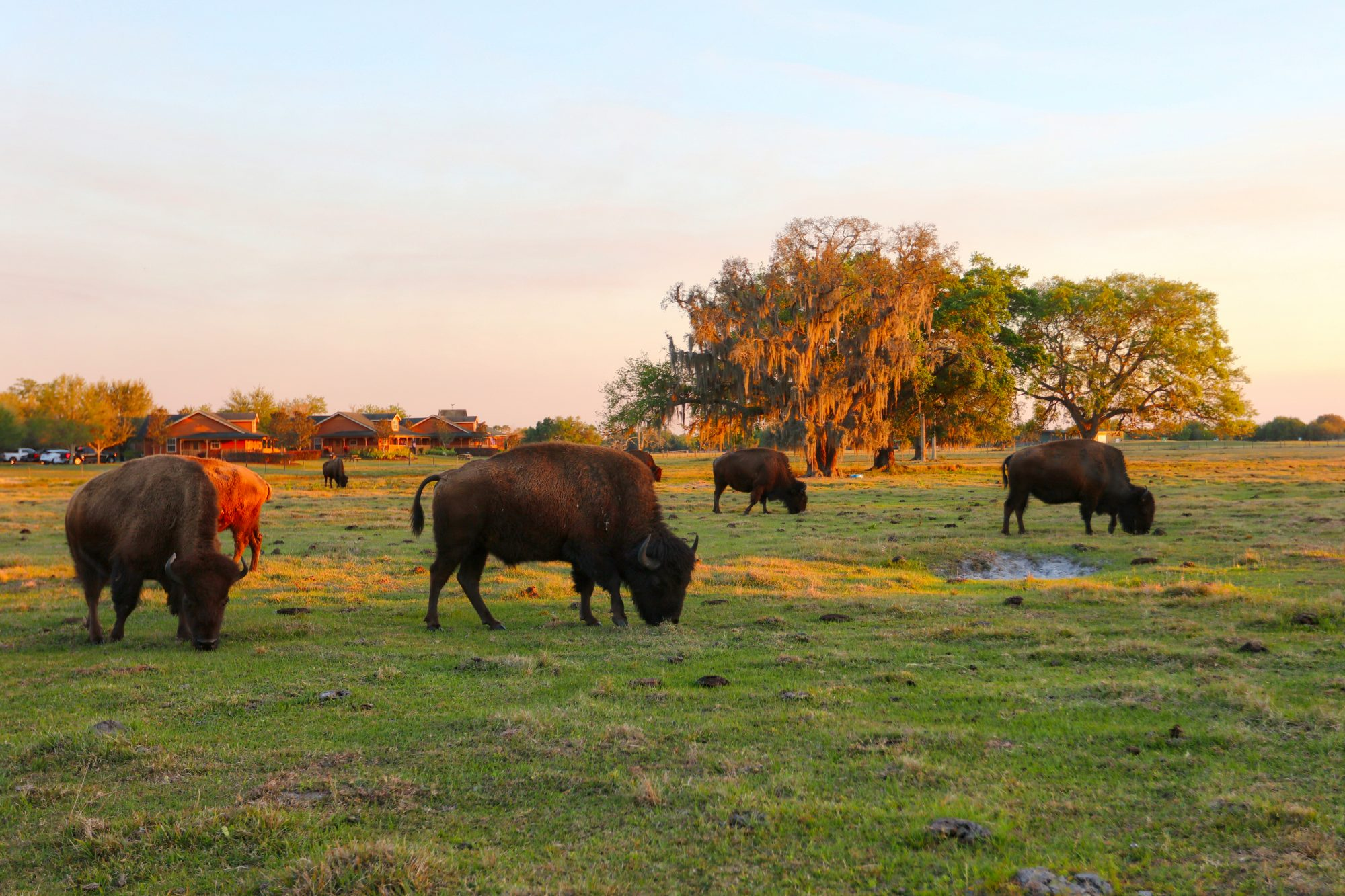 Westgate River Ranch Resort & Rodeo in River Ranch, Florida