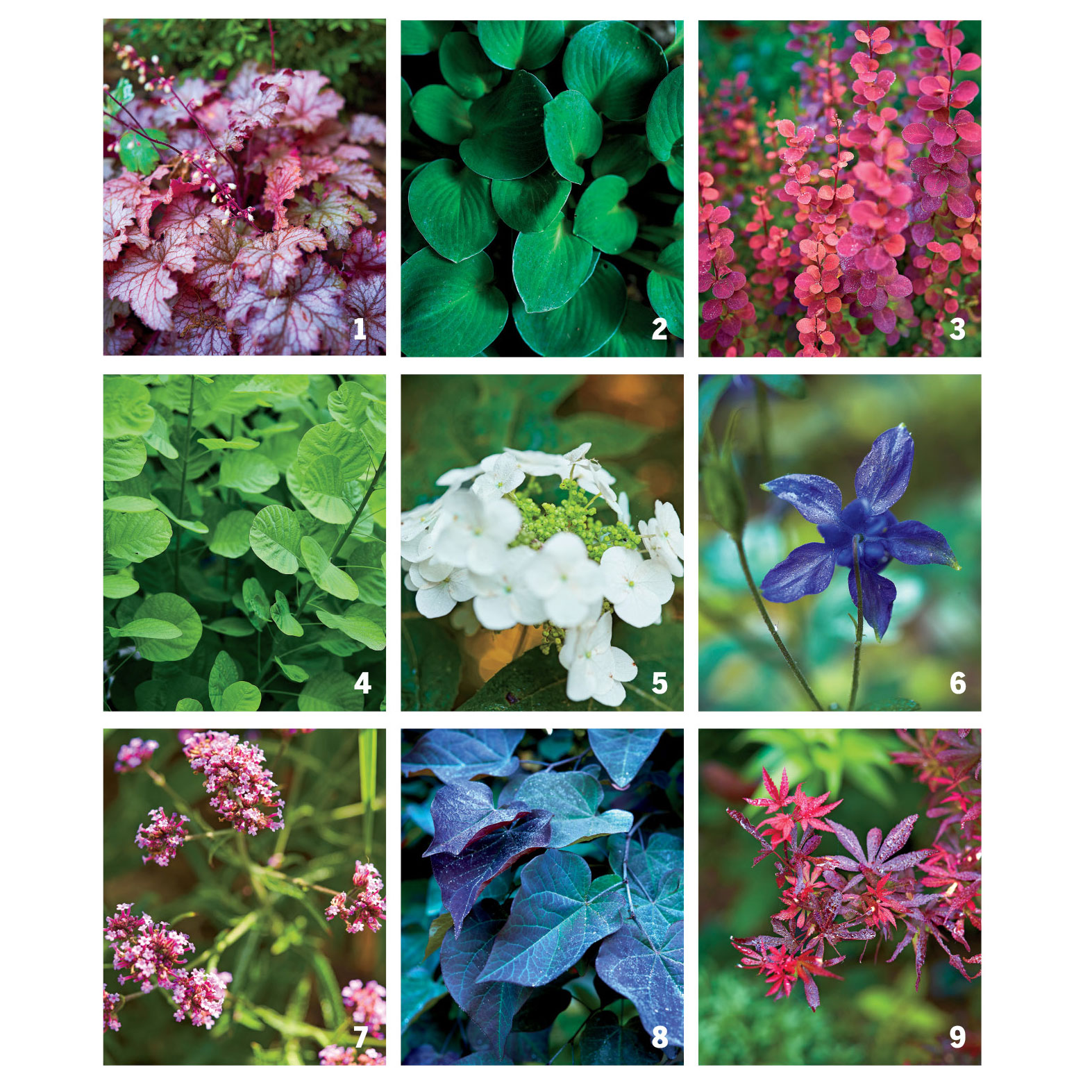 Jay Sifford's Favorite Plants