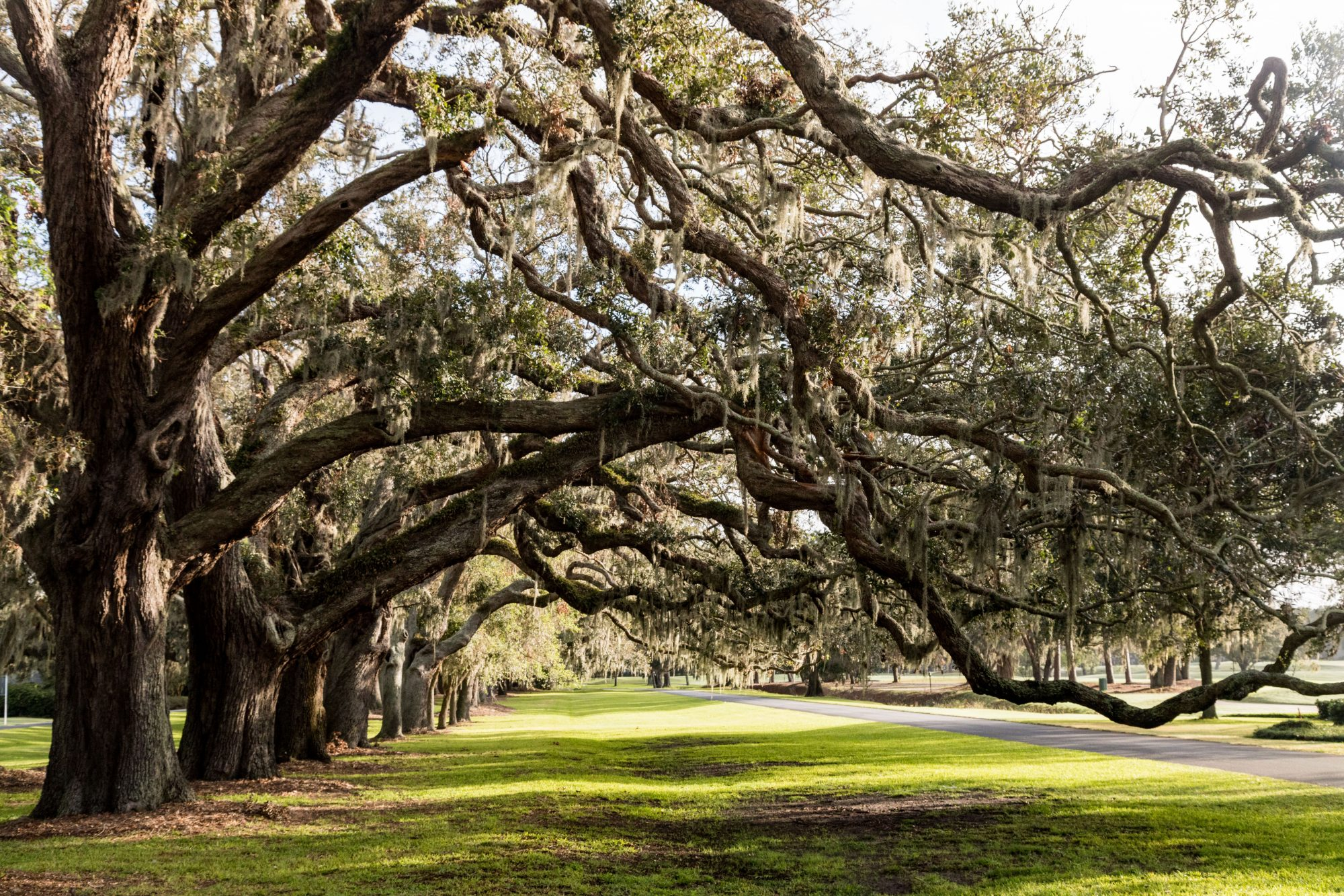 The Avenue of Oaks at the entrance of the Sea Island Golf Club