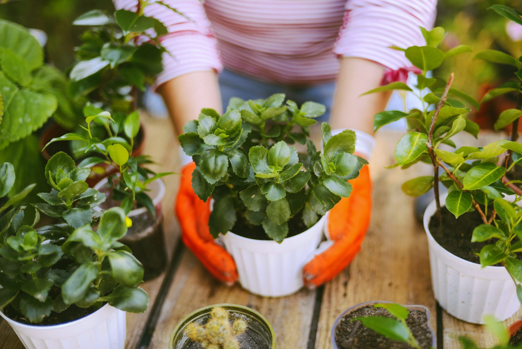 Caring for Plants