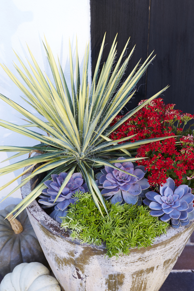 Heat-Tolerant Container Gardens for Sweltering Summers