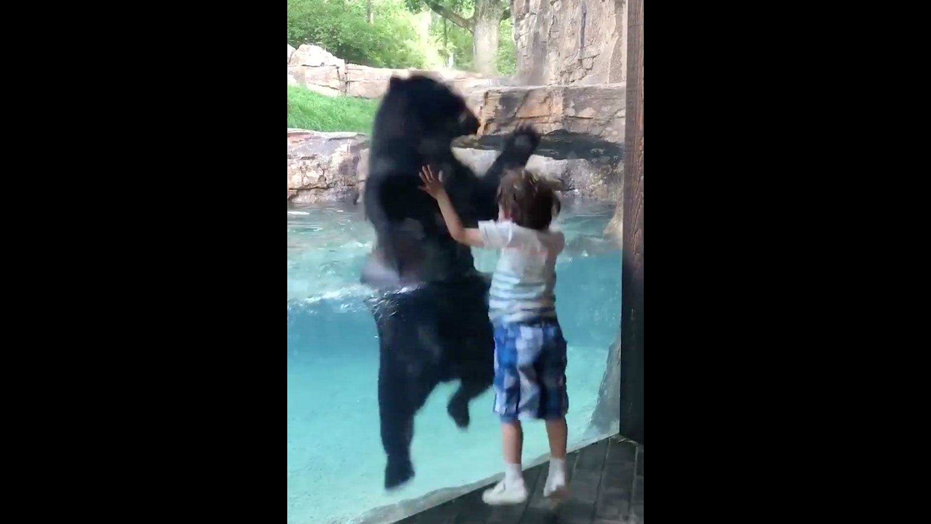 Boy and Bear Jump at Nashville Zoo
