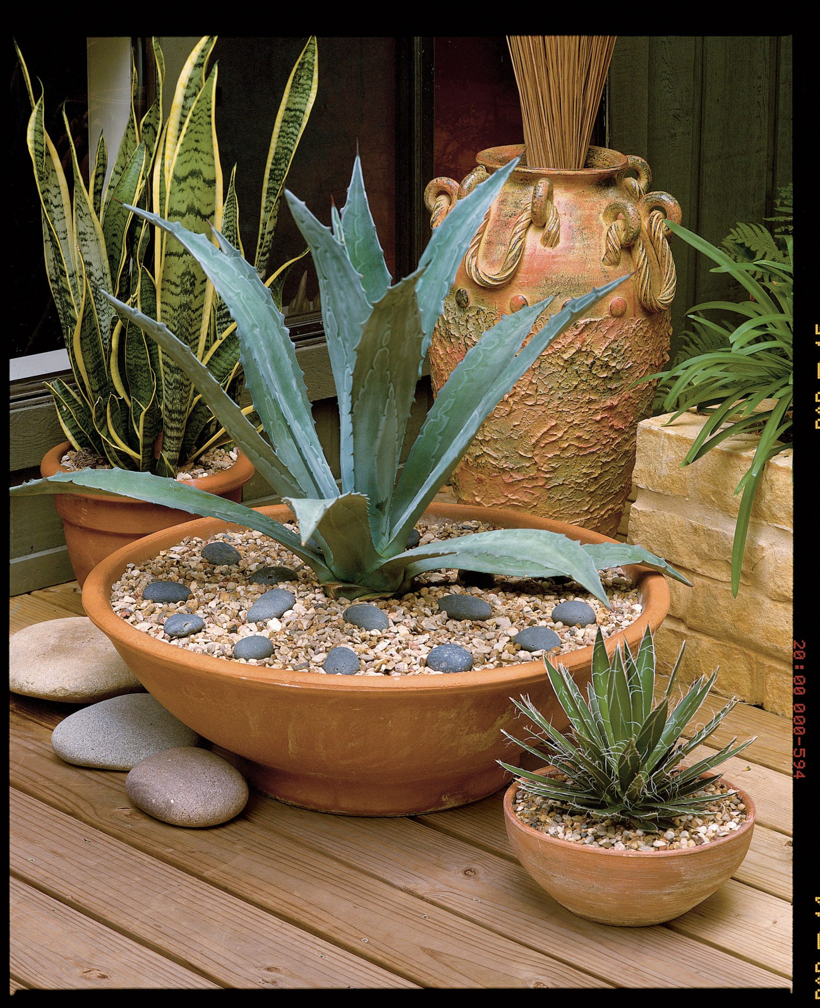 Simple Agave Container