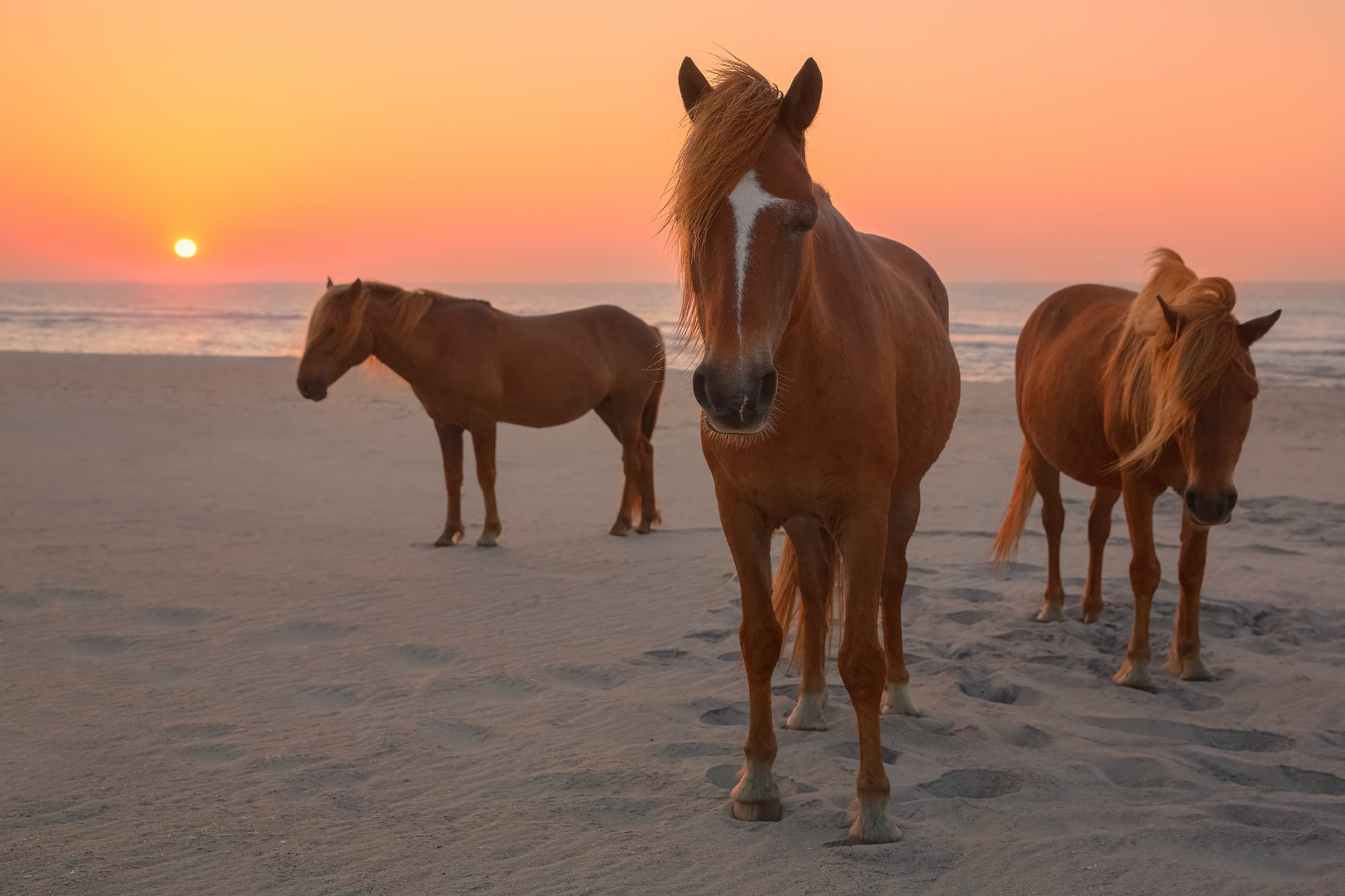 Assateague Island Ntl Seashore, Maryland, United States
