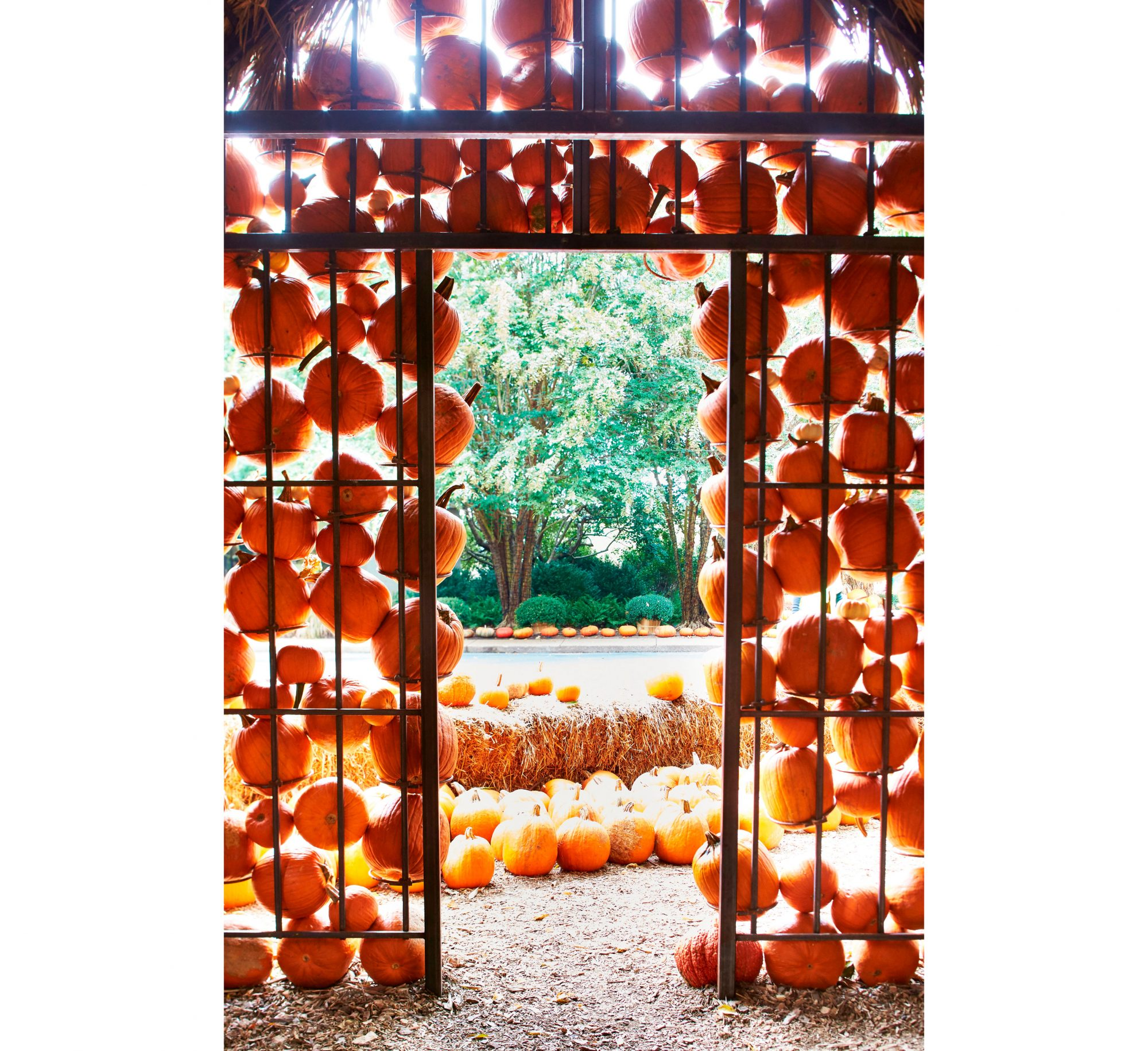 Interior Structure of Cheekwood Pumpkin House