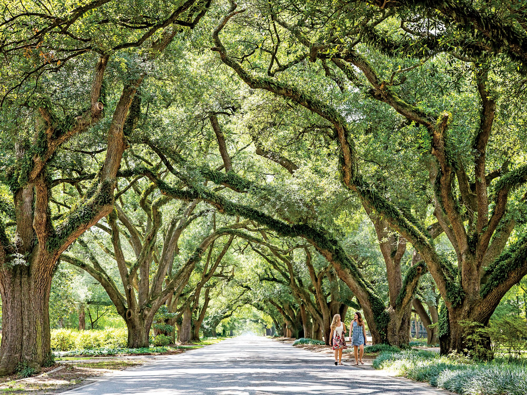 Oak Tree-Lined Streets in Aiken South Carolina