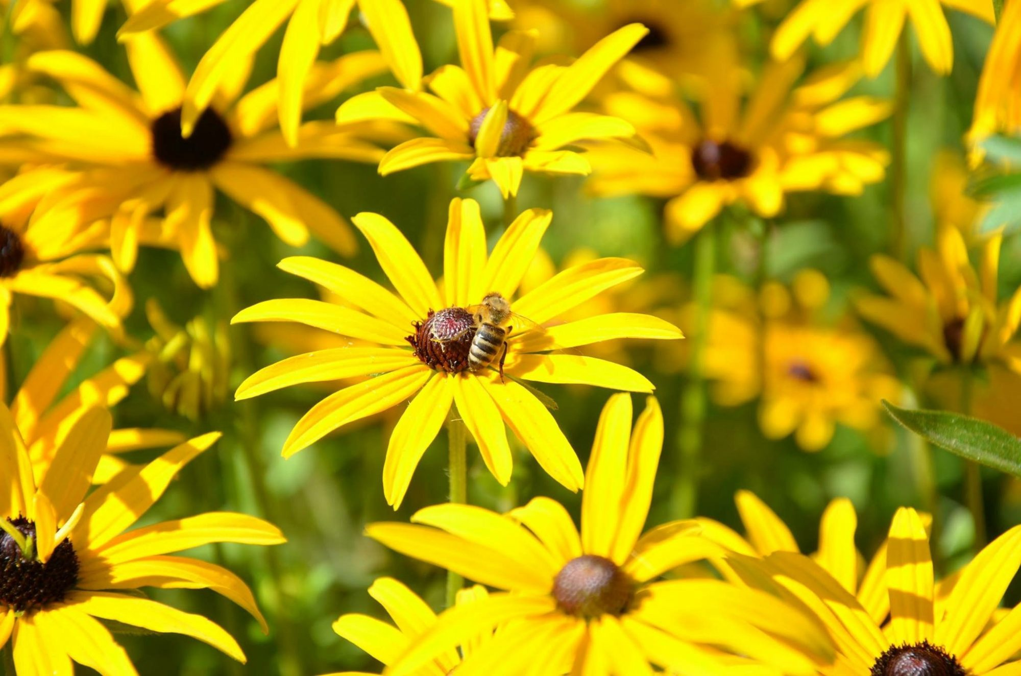 12 Flowers That Are Good For Bees Southern Living