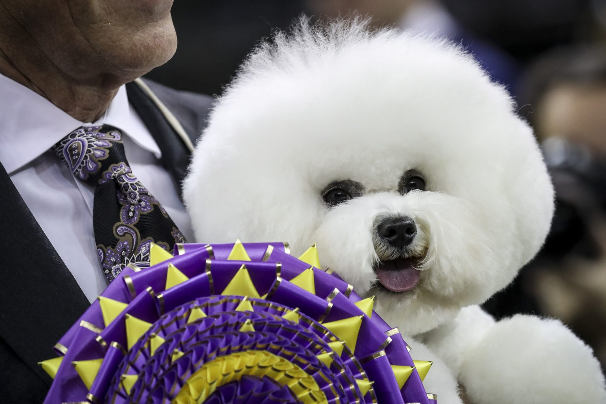 Westminster Dog Show Winner Flynn