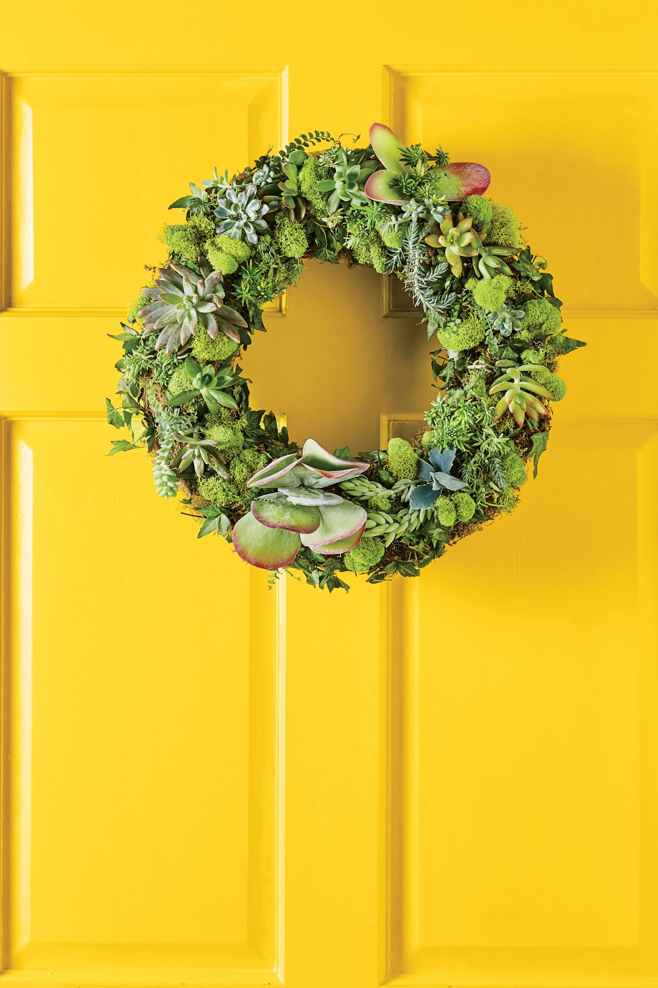 Succulent Circle Wreath