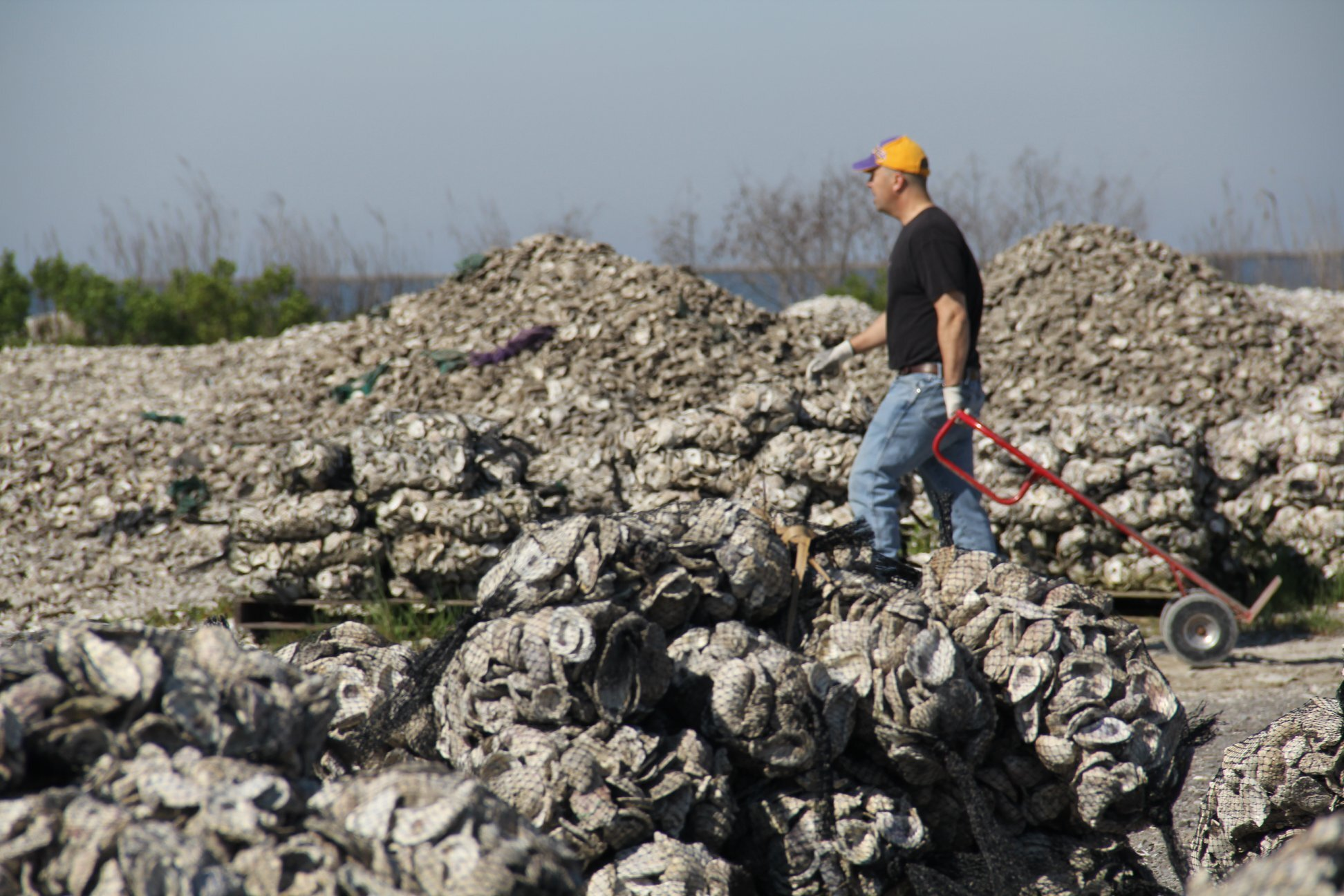 Oyster Shell Reef To Protect Louisiana Tribeis History From