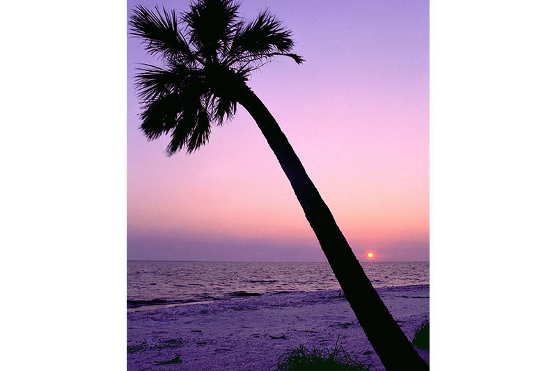 Silhouette of a palm tree on a beach during sunset, Cayo Costa State Park, Florida, USA
