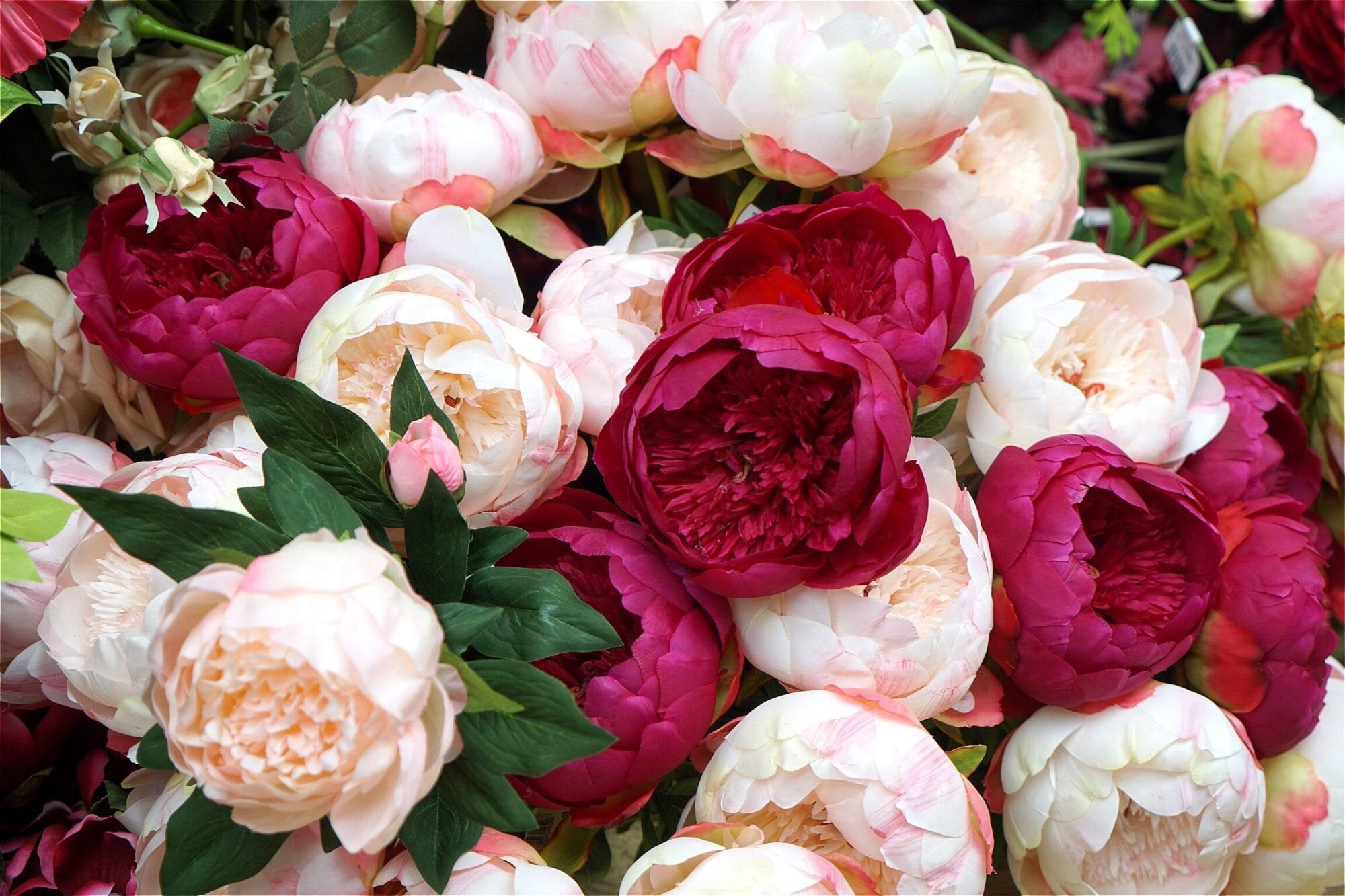These Peony Colors Will Brighten Up Your Garden Southern Living