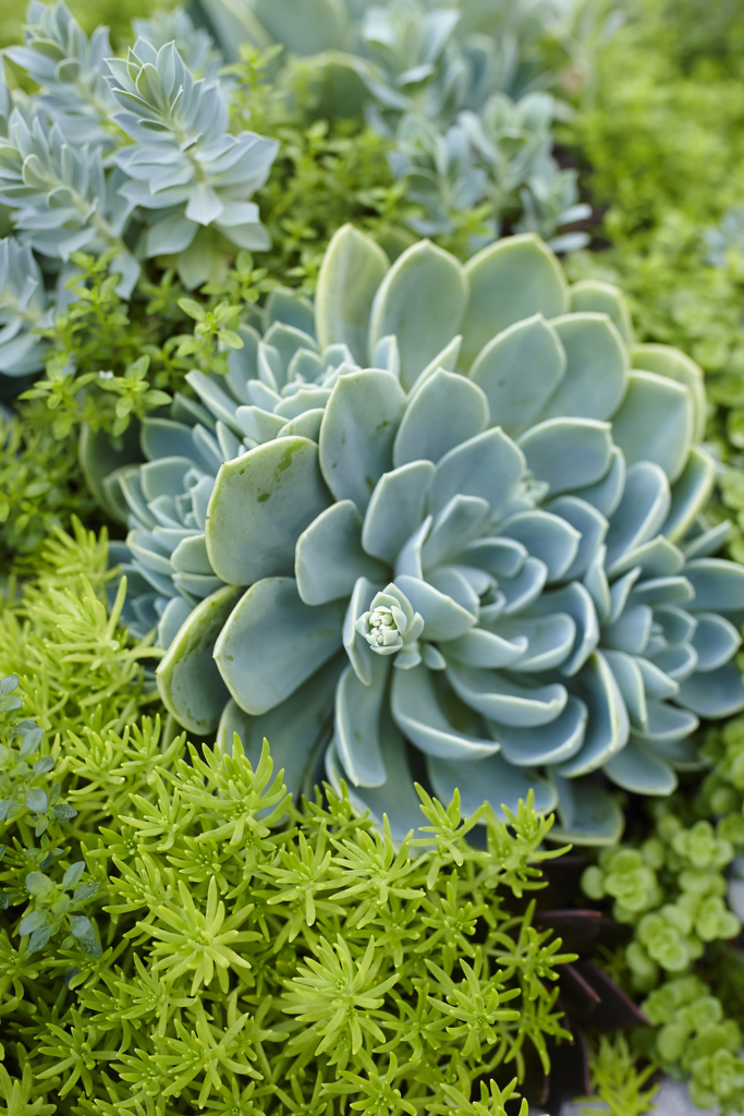 Find New Ways with Succulents