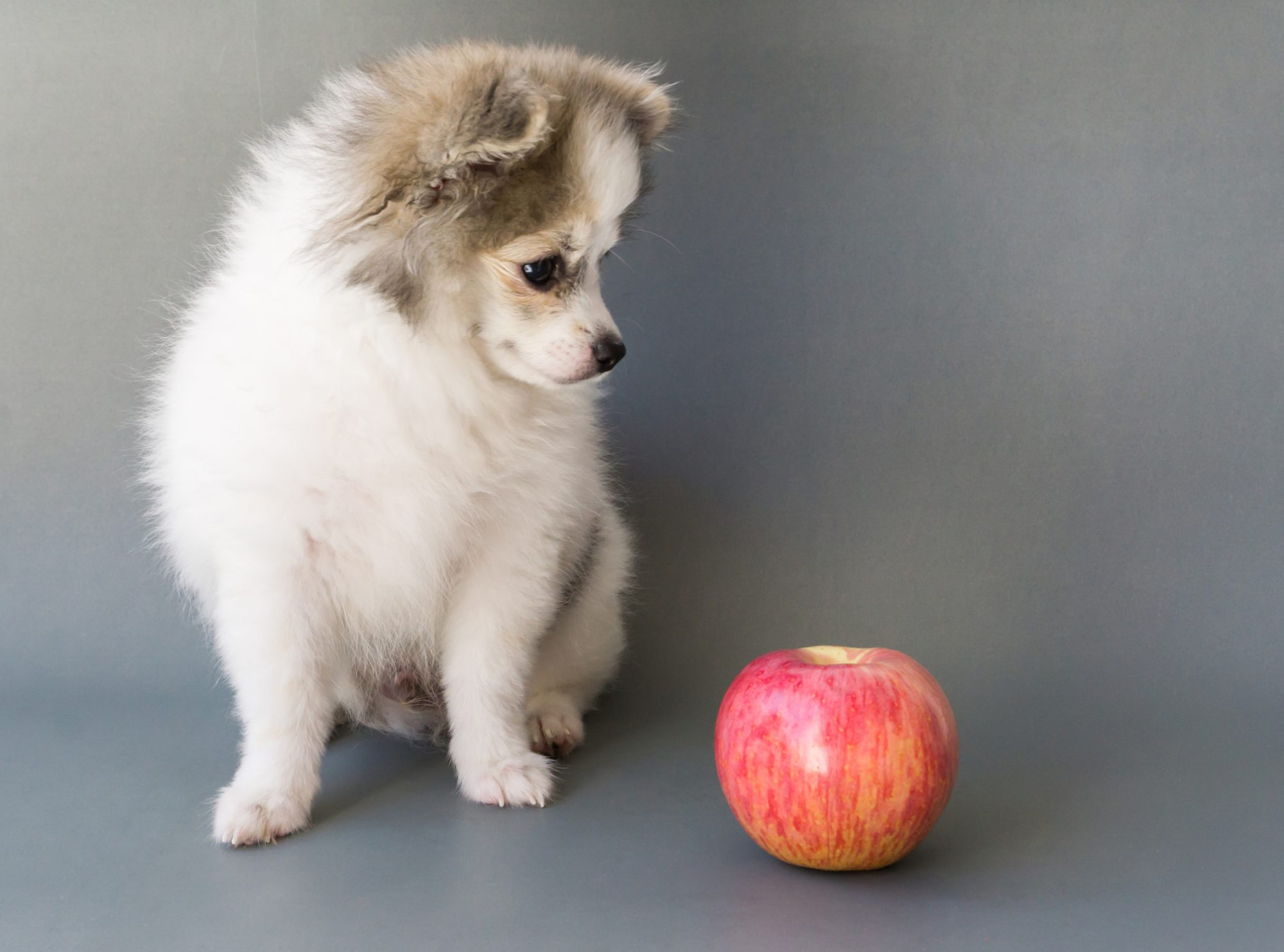 Dogs-Apples
