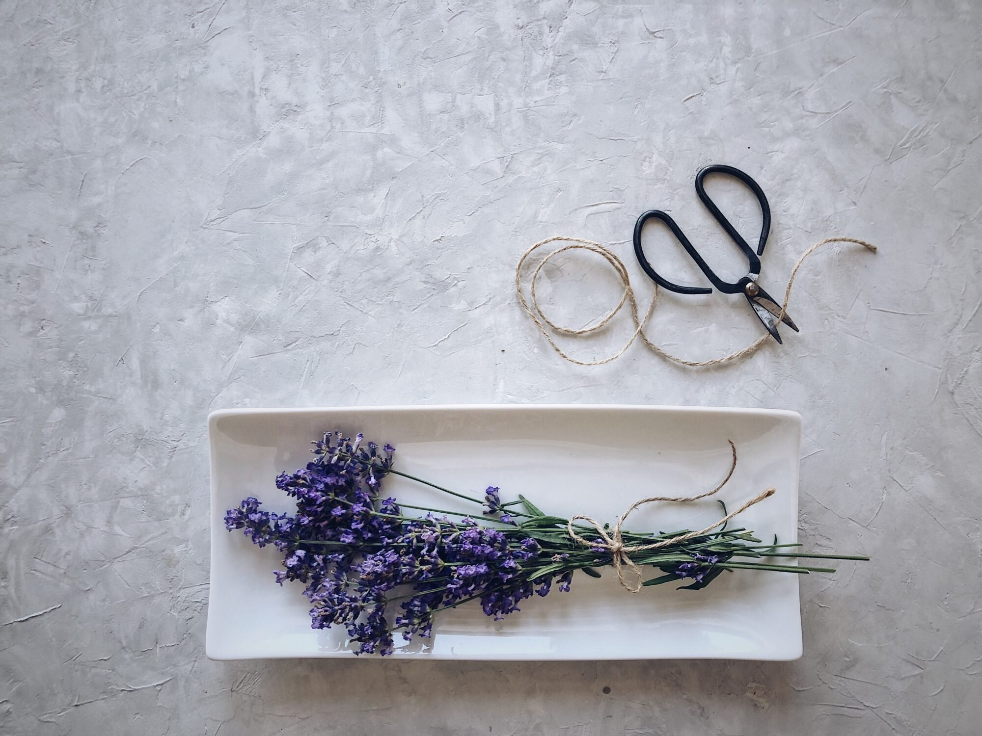 When To Harvest Lavender Flowers Southern Living