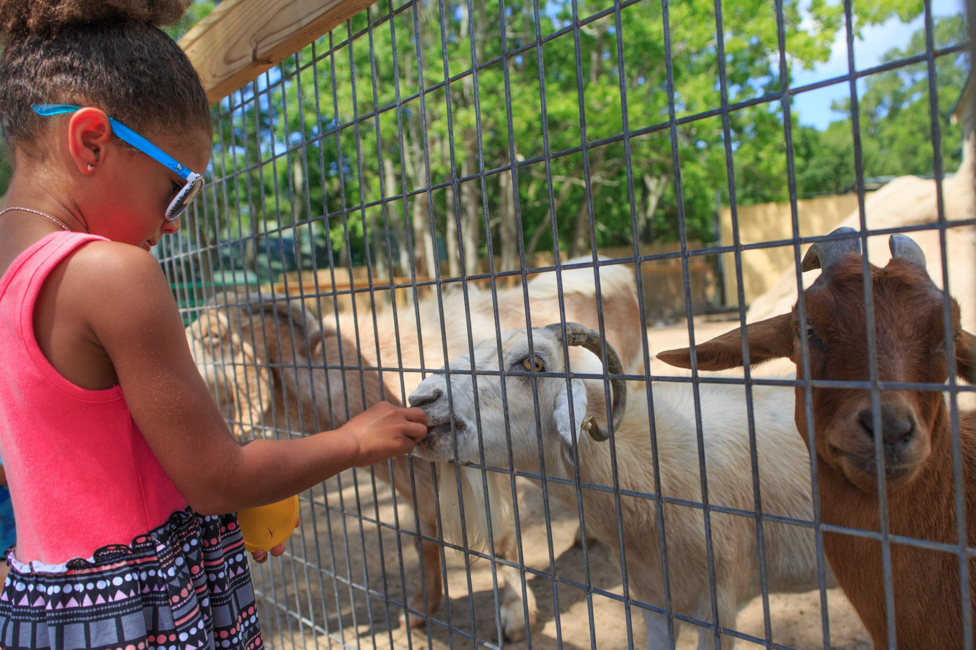 Visit the Alabama Gulf Coast Zoo
