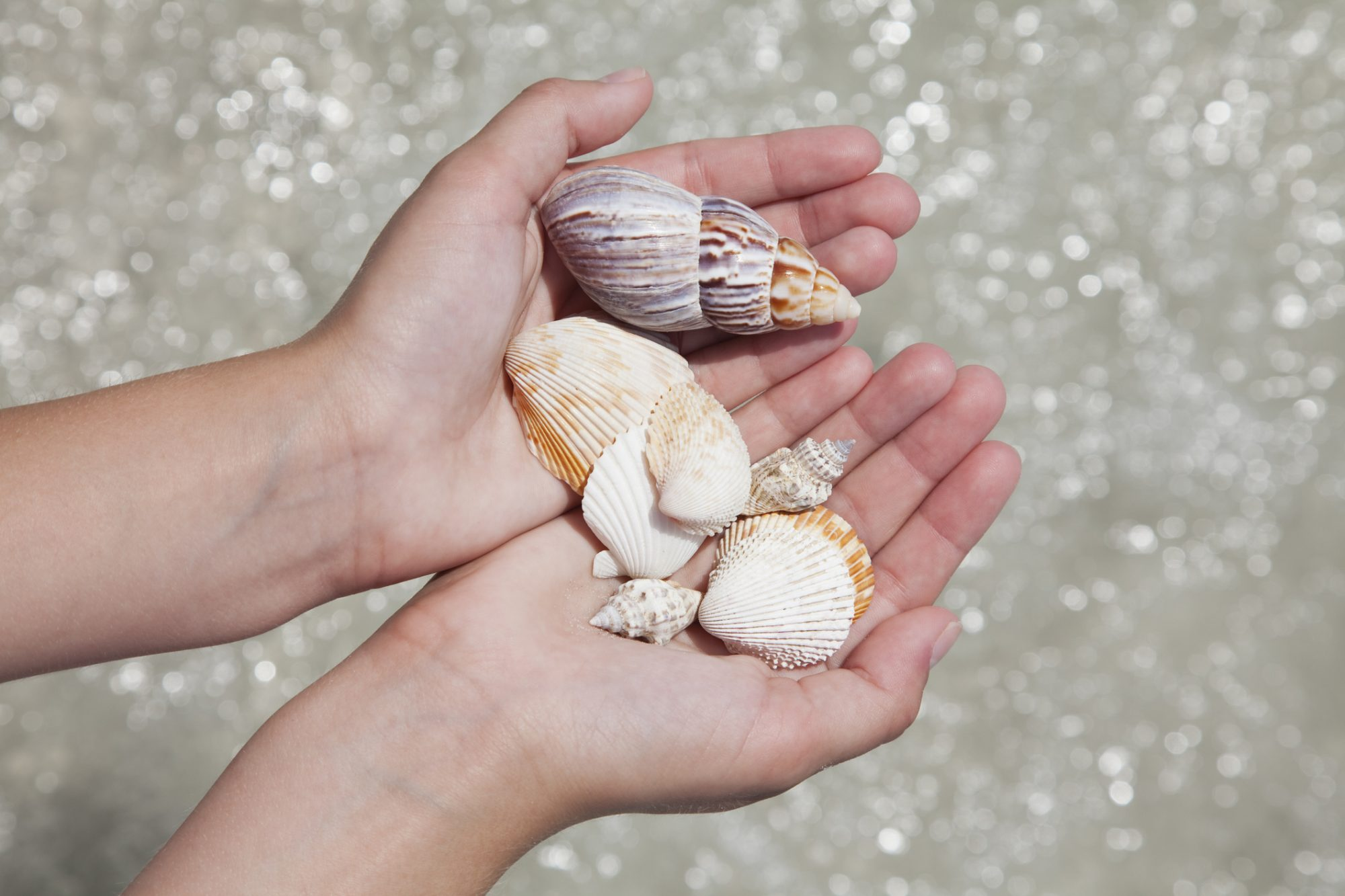 Holding Seashells at the Beach