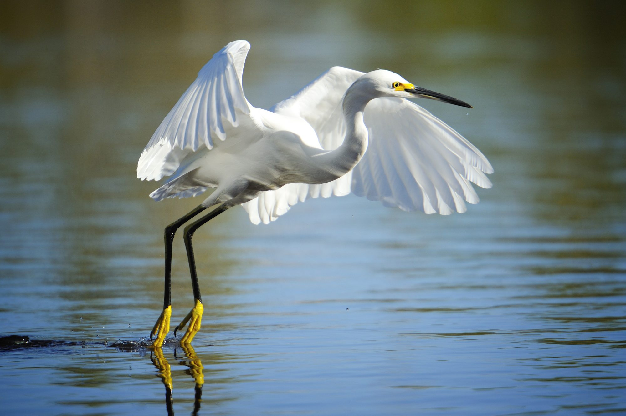 9 Must-Visit Birdwatching Destinations in the South.