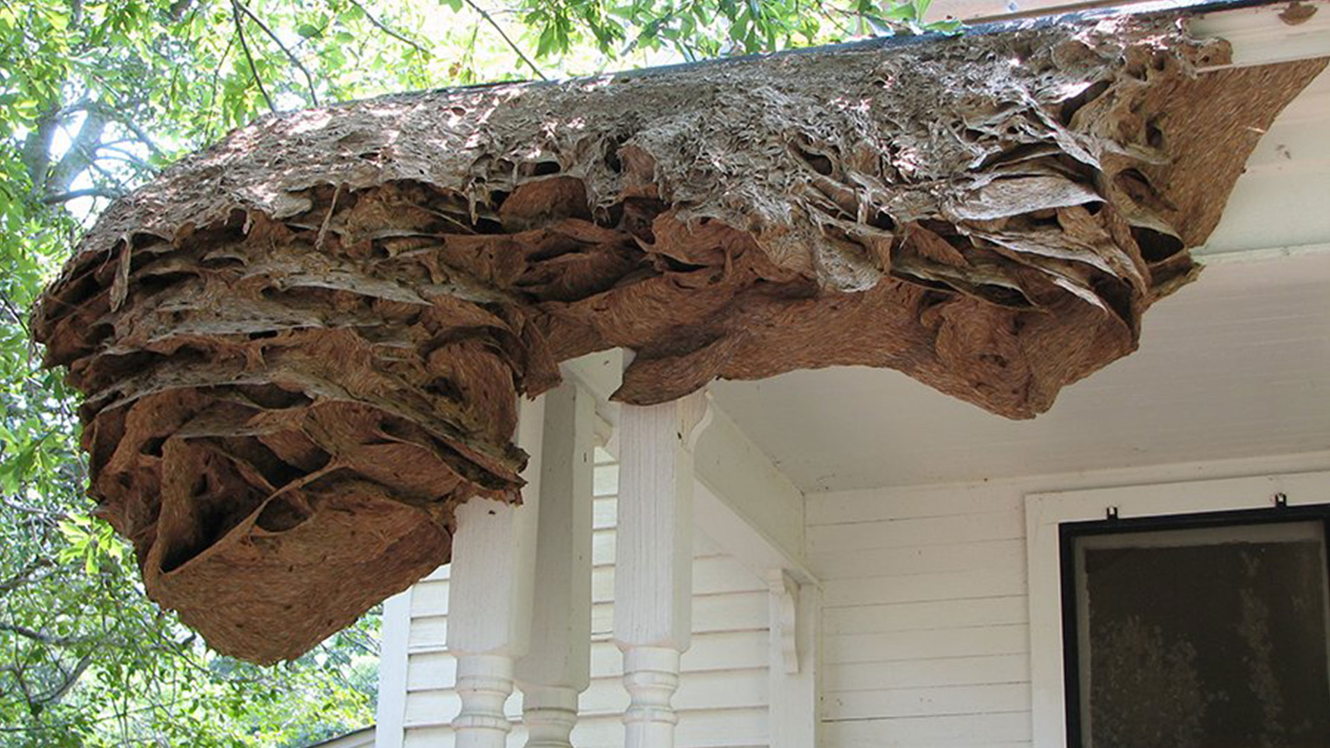 Wasp Super Nest