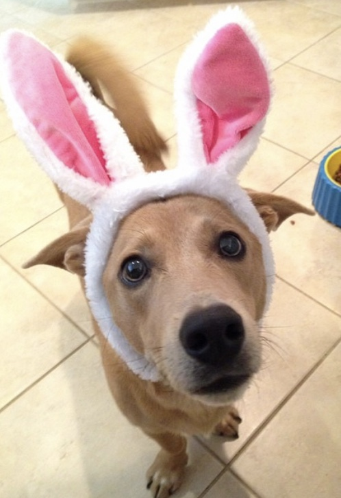 How To Throw an Easter Egg Hunt For Your Dog