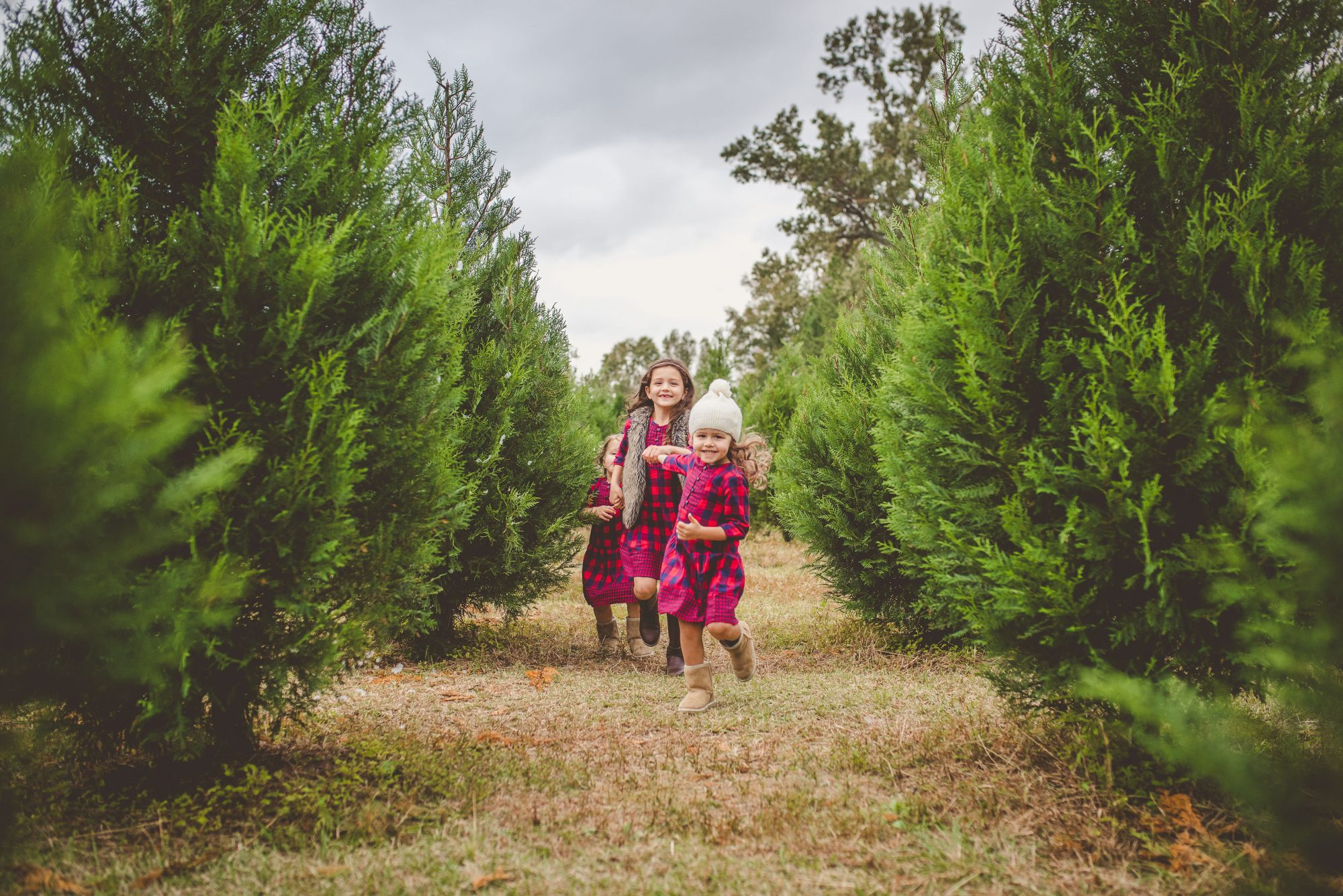Lebanon Christmas Tree Farm