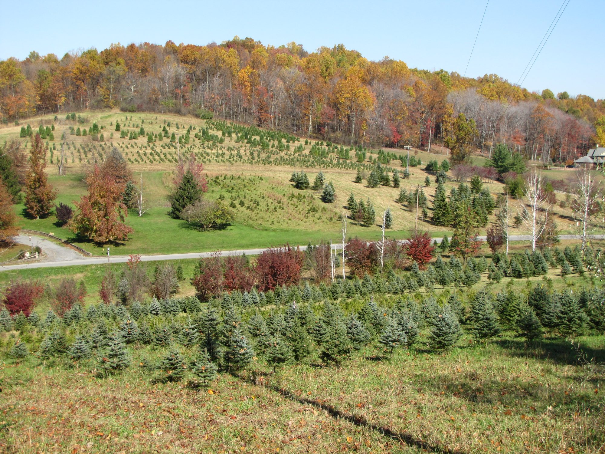 Mt Zion Nursery Xmas Tree Farm