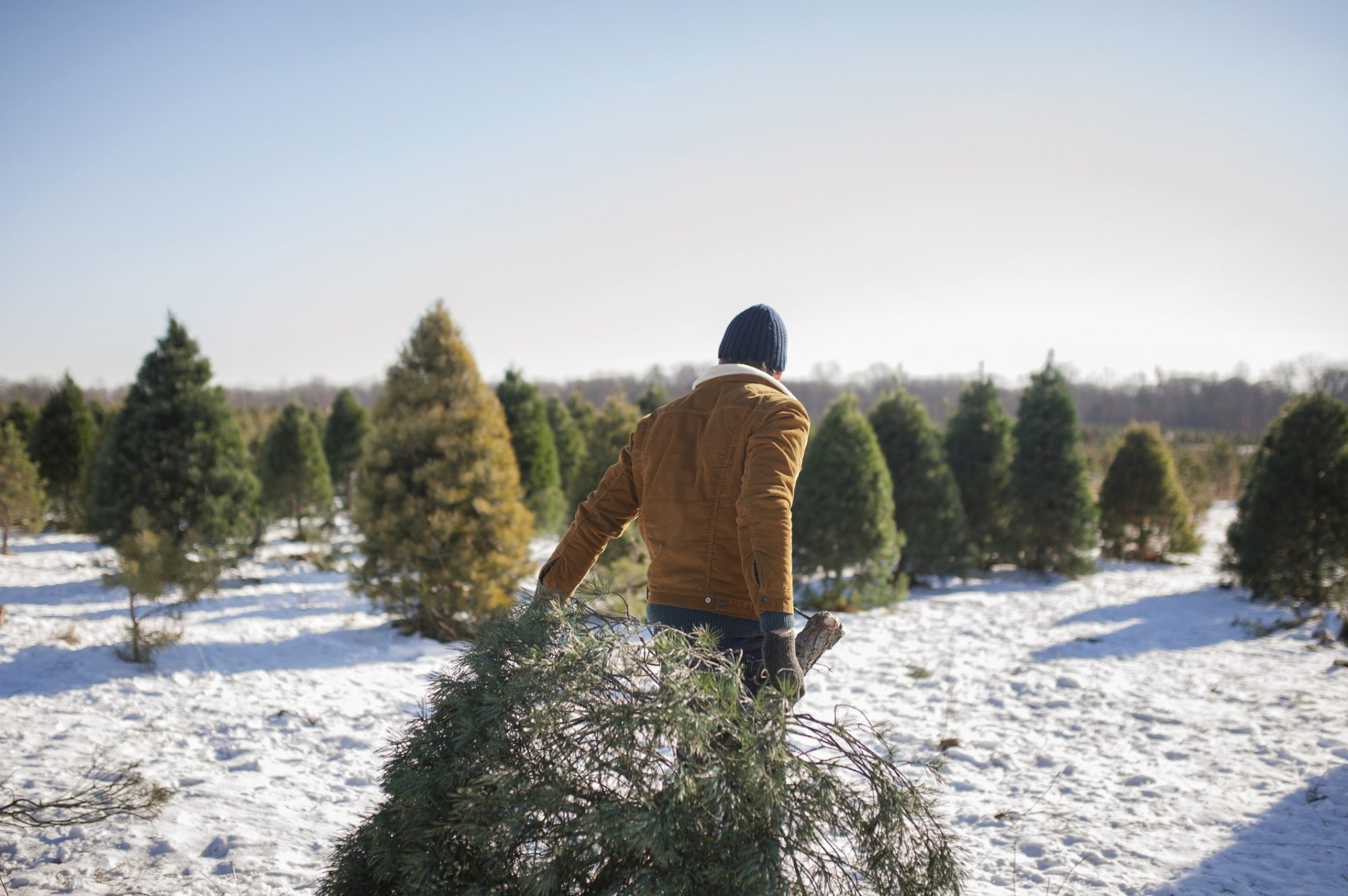 Romance Christmas Tree Farm: Romance, AR