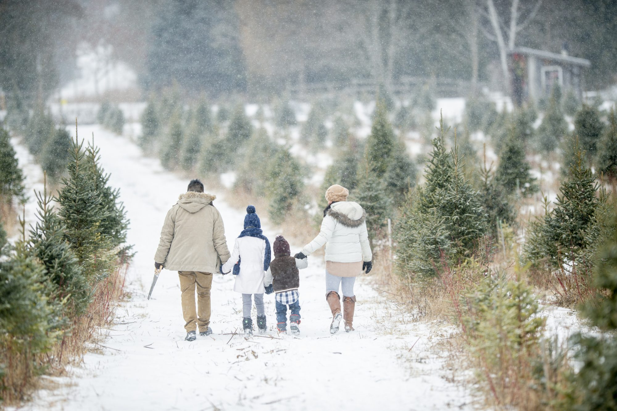 Shell's Christmas Tree Farm: Tuscumbia, AL