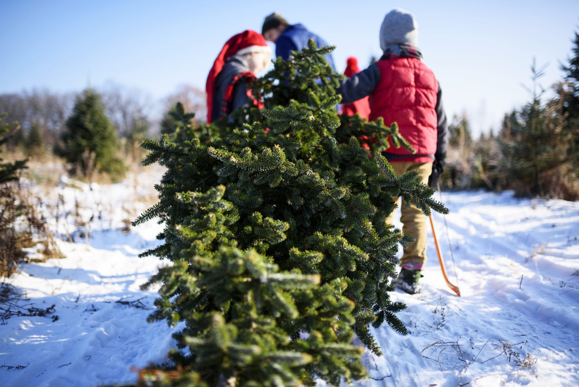 Timberhill Christmas Tree Farm: Chatawa, MO
