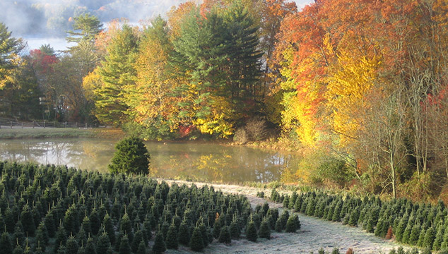 Tom Sawyer Tree Farm and Elf Village: Glenville, NC