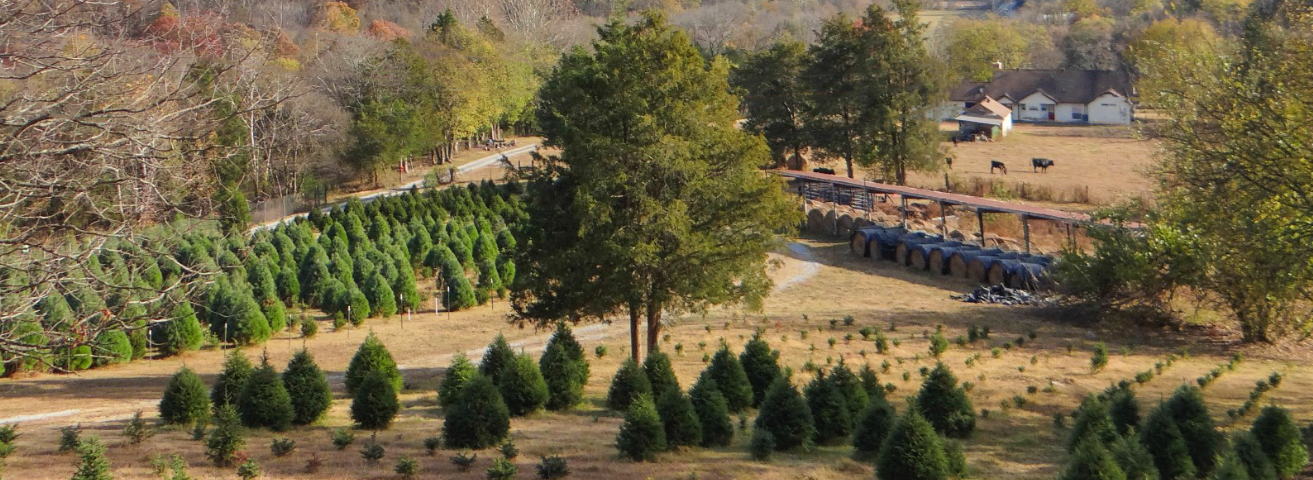Wildwood Christmas Tree Farm: Woodbury, TN