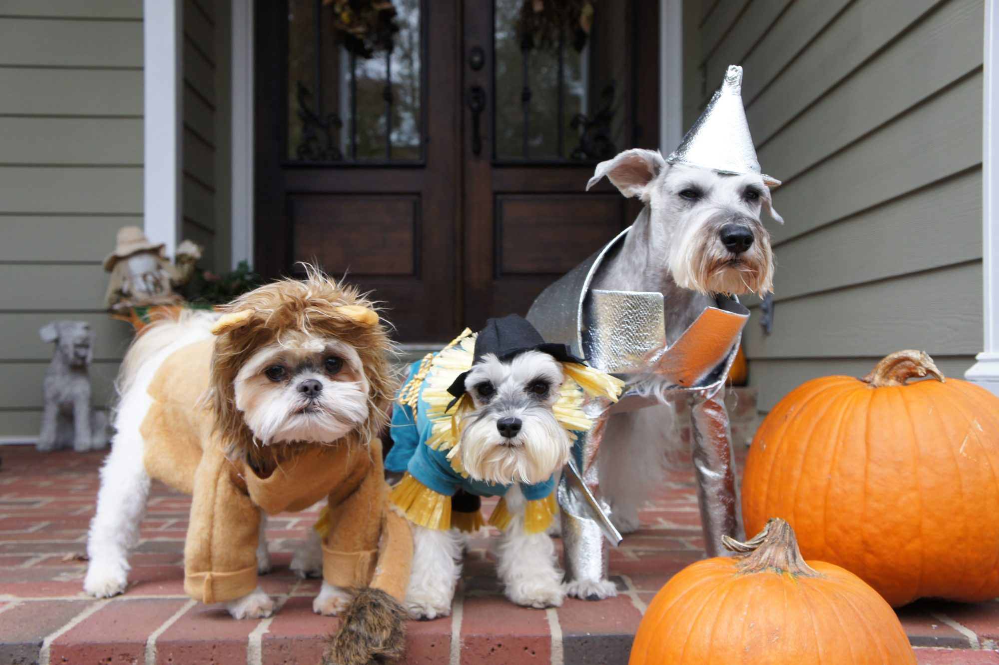 The Wizard of Pawz Dog Costume
