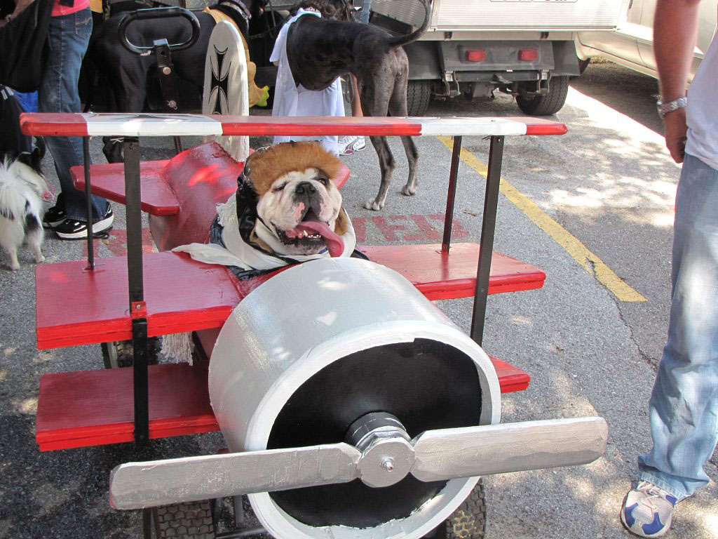 The Red Baron Dog Costume