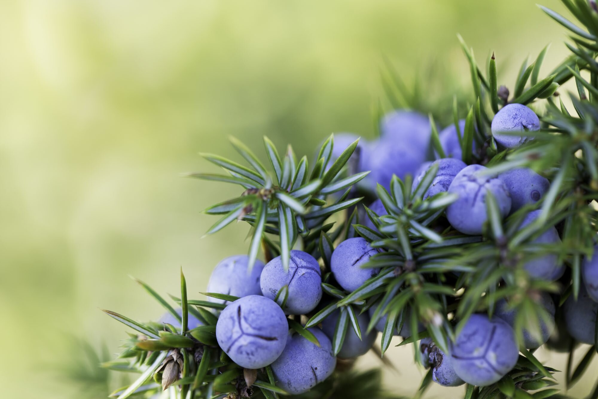 10 Hardy Container Plants For Fall And Winter Southern Living