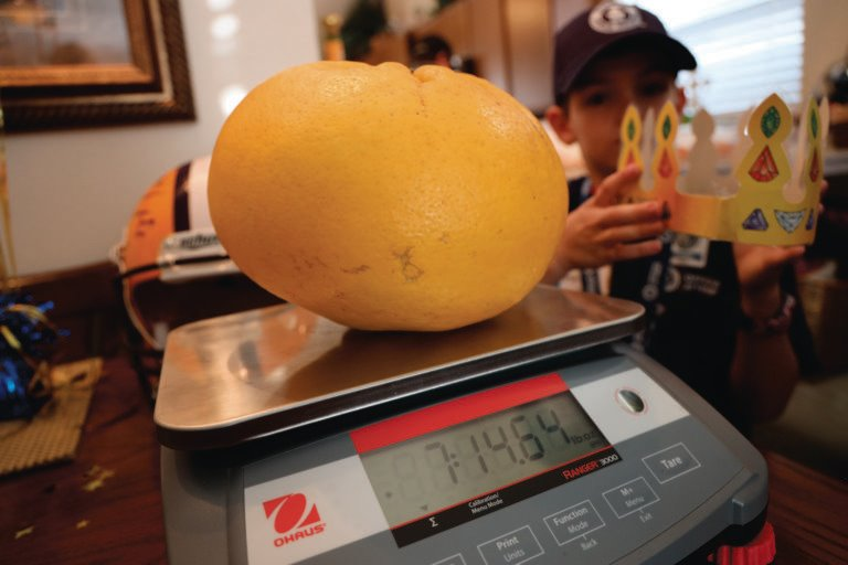 Giant Grapefruit on Scale