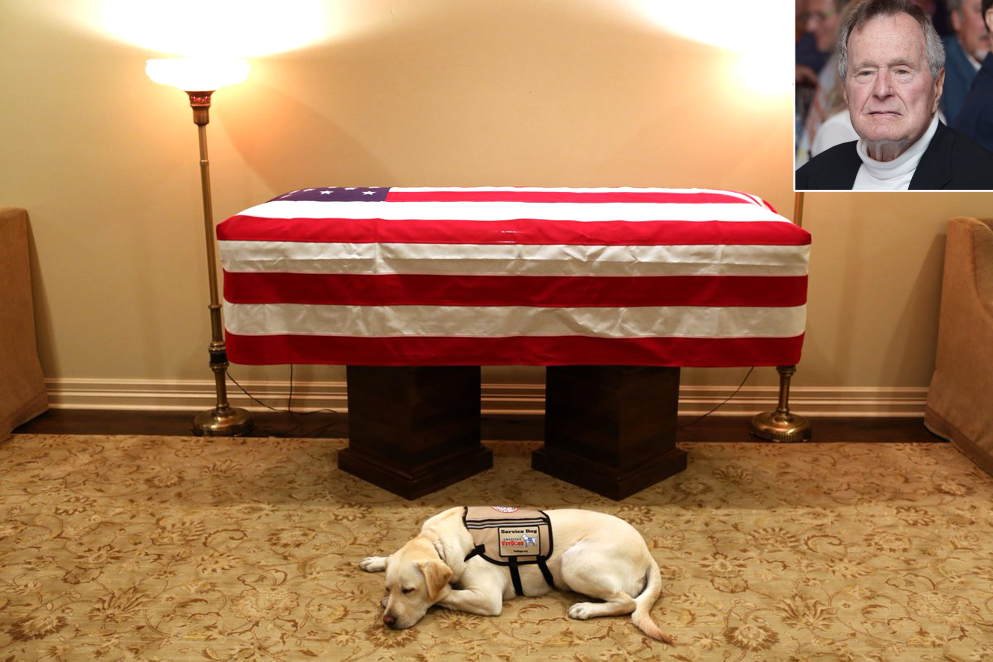 George H.W. Bush's Service Dog Sully Receives Public Service Award for Bringing Love and Joy bush-sully-1-2000