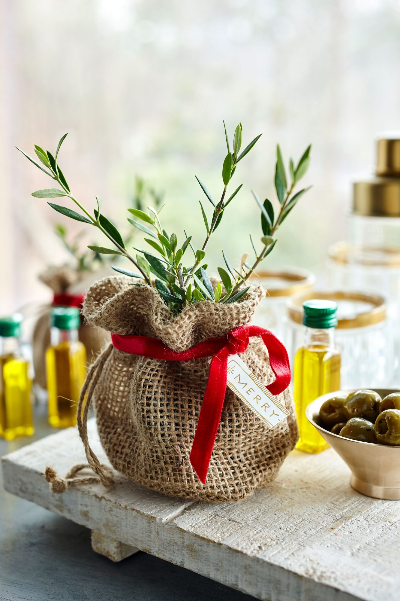 Olive Tree Seedling in Burlap Bag