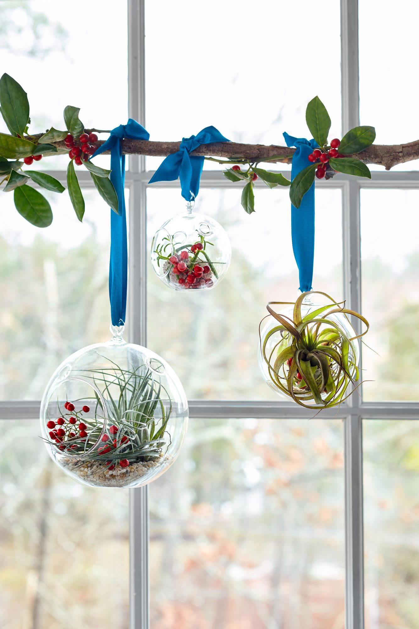 Hanging Globe Air Plants Garden Gifts