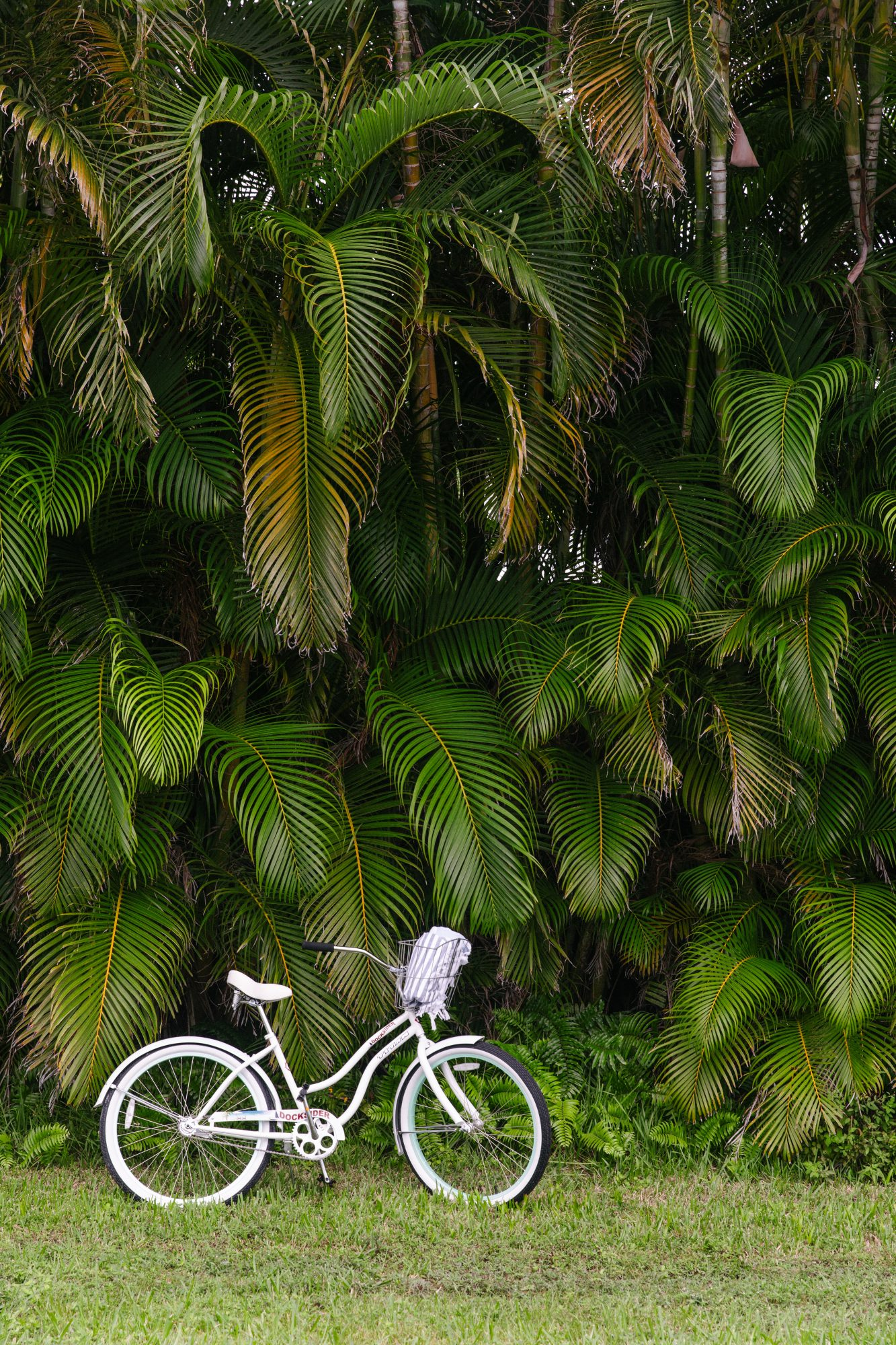 Bike in front of Trees in Anna Maria, FL