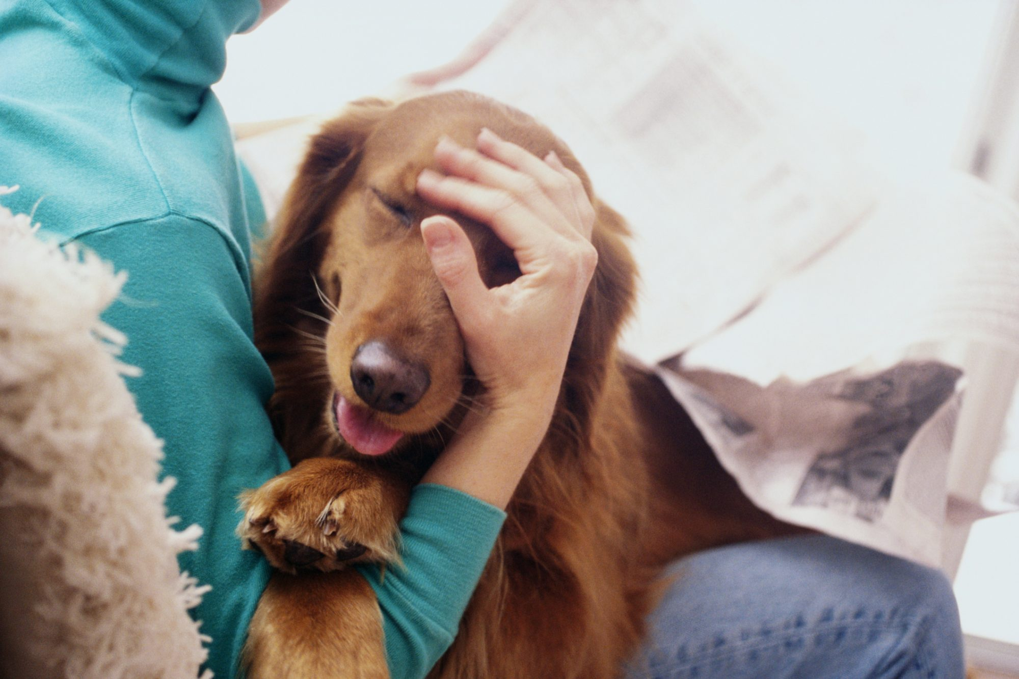 The 11 Most Affectionate Dog Breeds