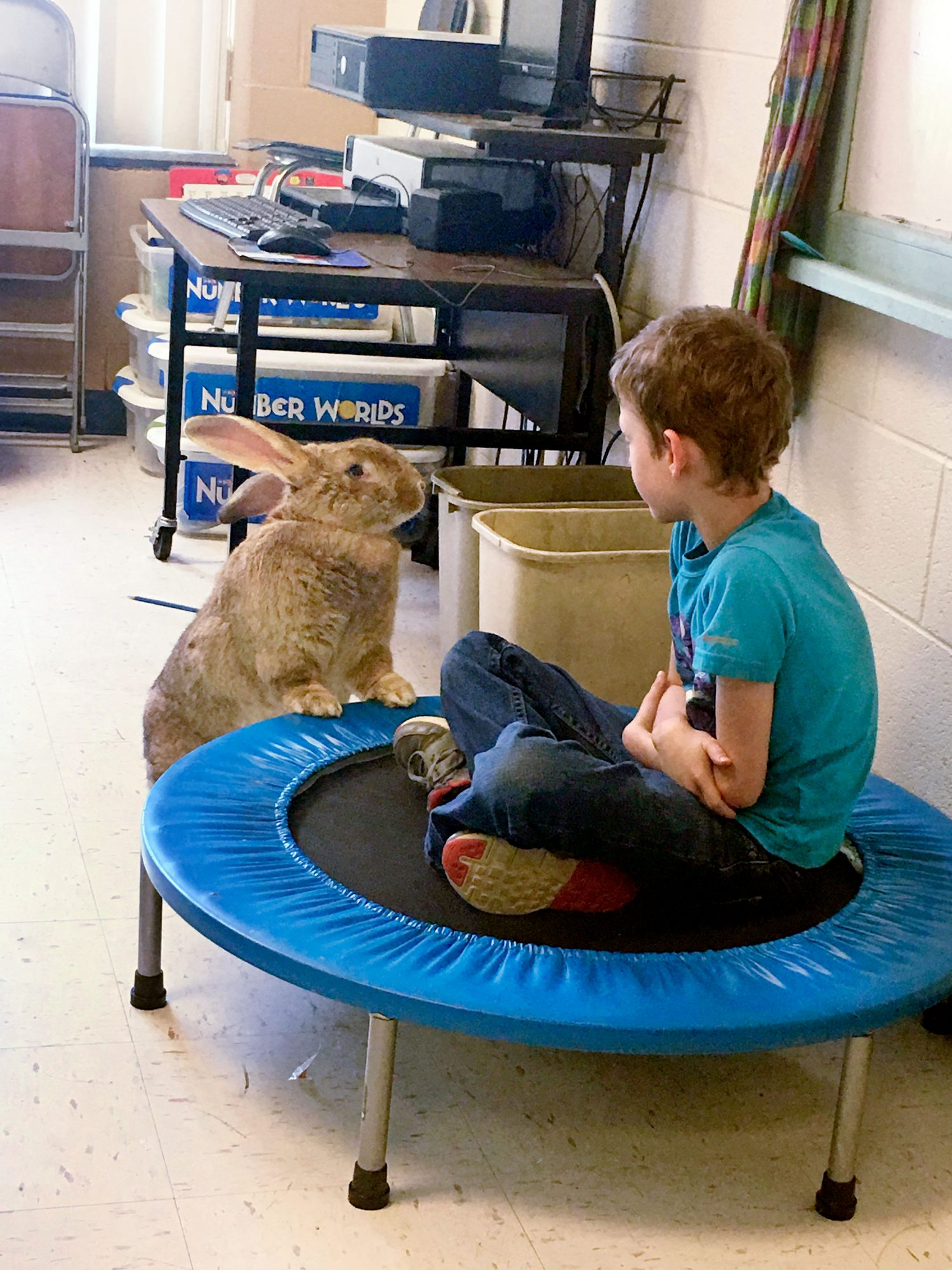Pets to the Rescue: Henry the Bunny