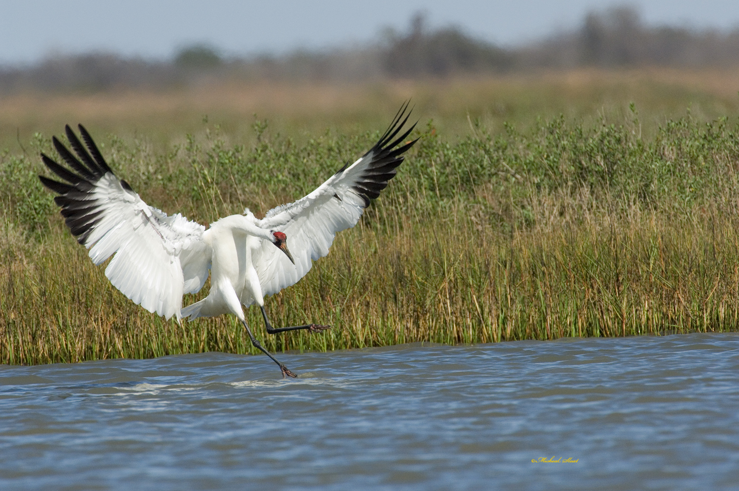 Attention, Birders: The Whooping Crane Festival in Port Aransas, Texas Is Next Month