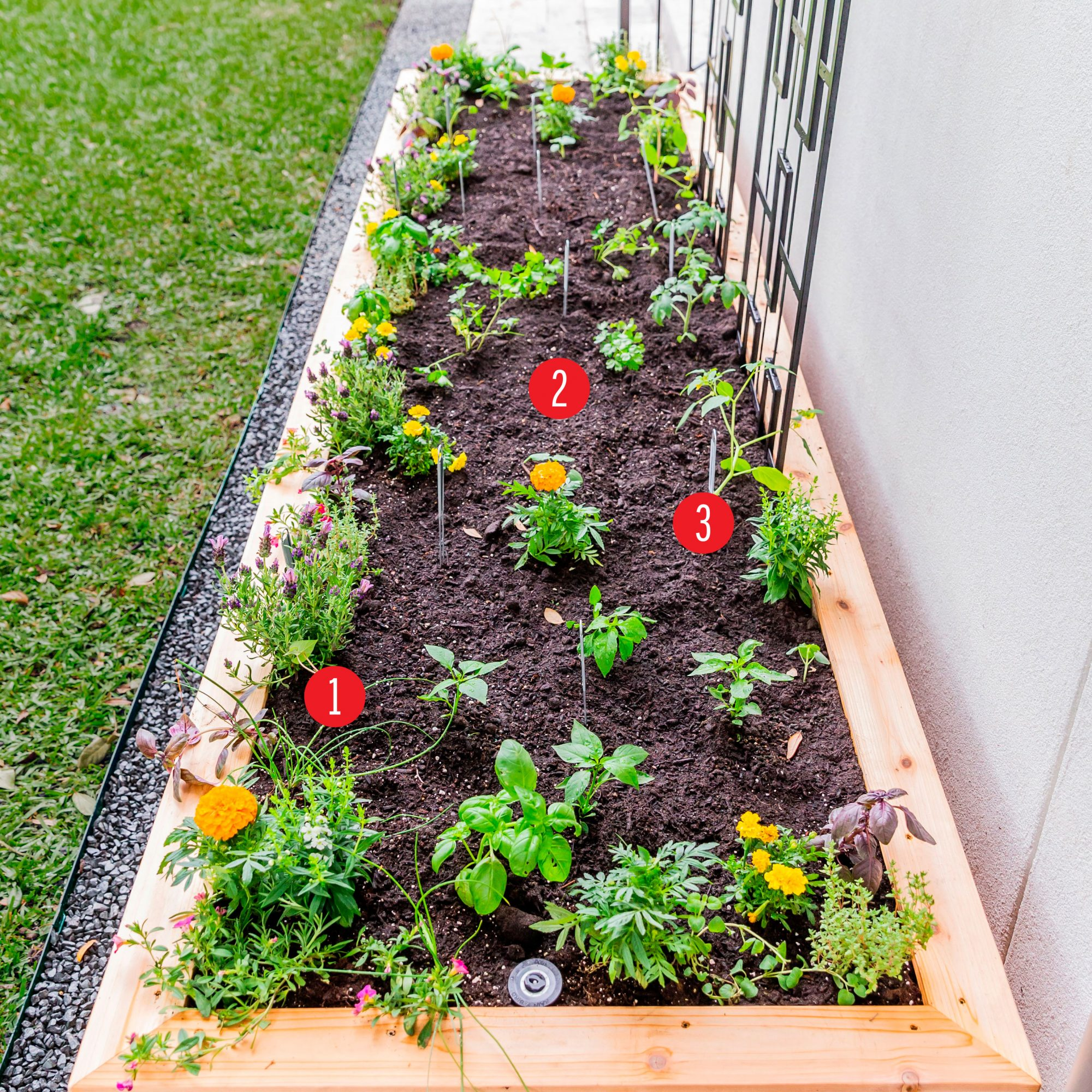 Nicole Burke Kitchen Garden Bed Planting Guide