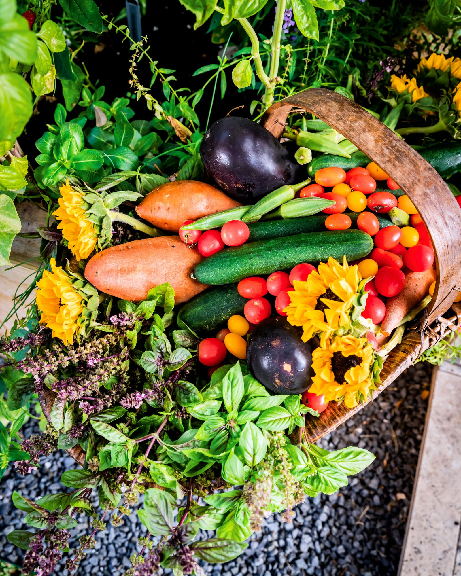Vegetable and Herb Bounty from Nicole Burke's Kitchen Garden Bed