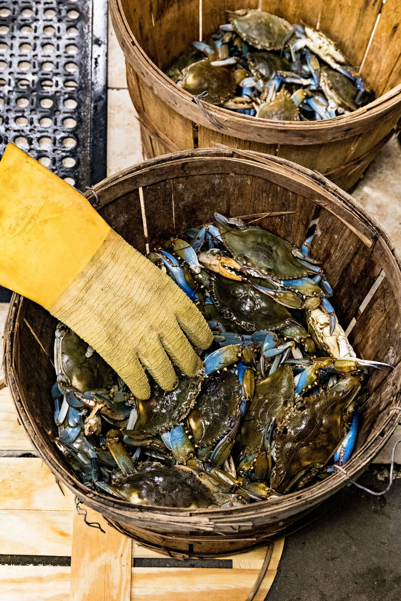 Bucket of blue crabs at Charlie Brown Seafood in Charleston