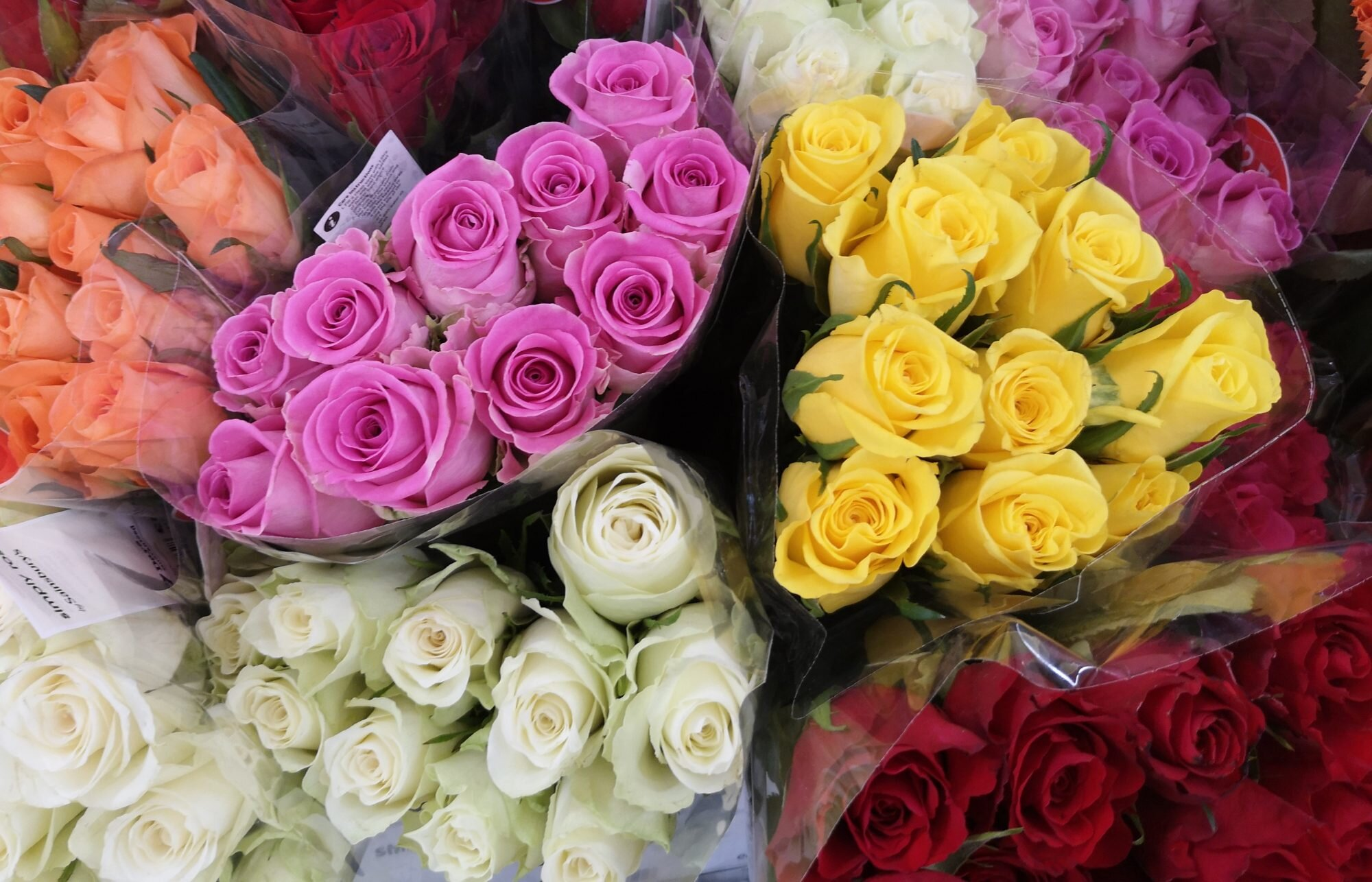 Different Rose Colors And Their Meanings Southern Living