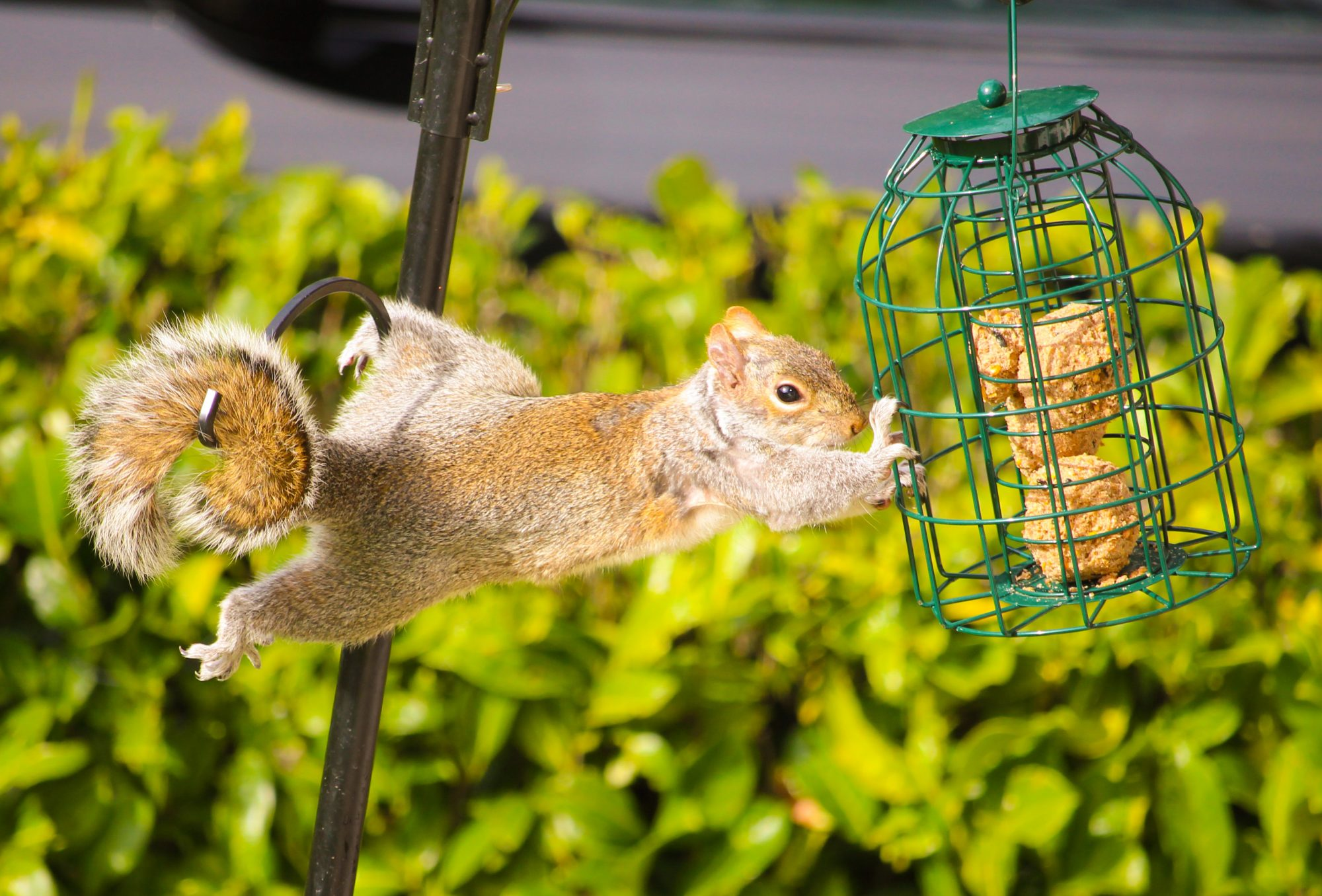 Tips for Keeping Squirrels Out of Your Bird Feeder